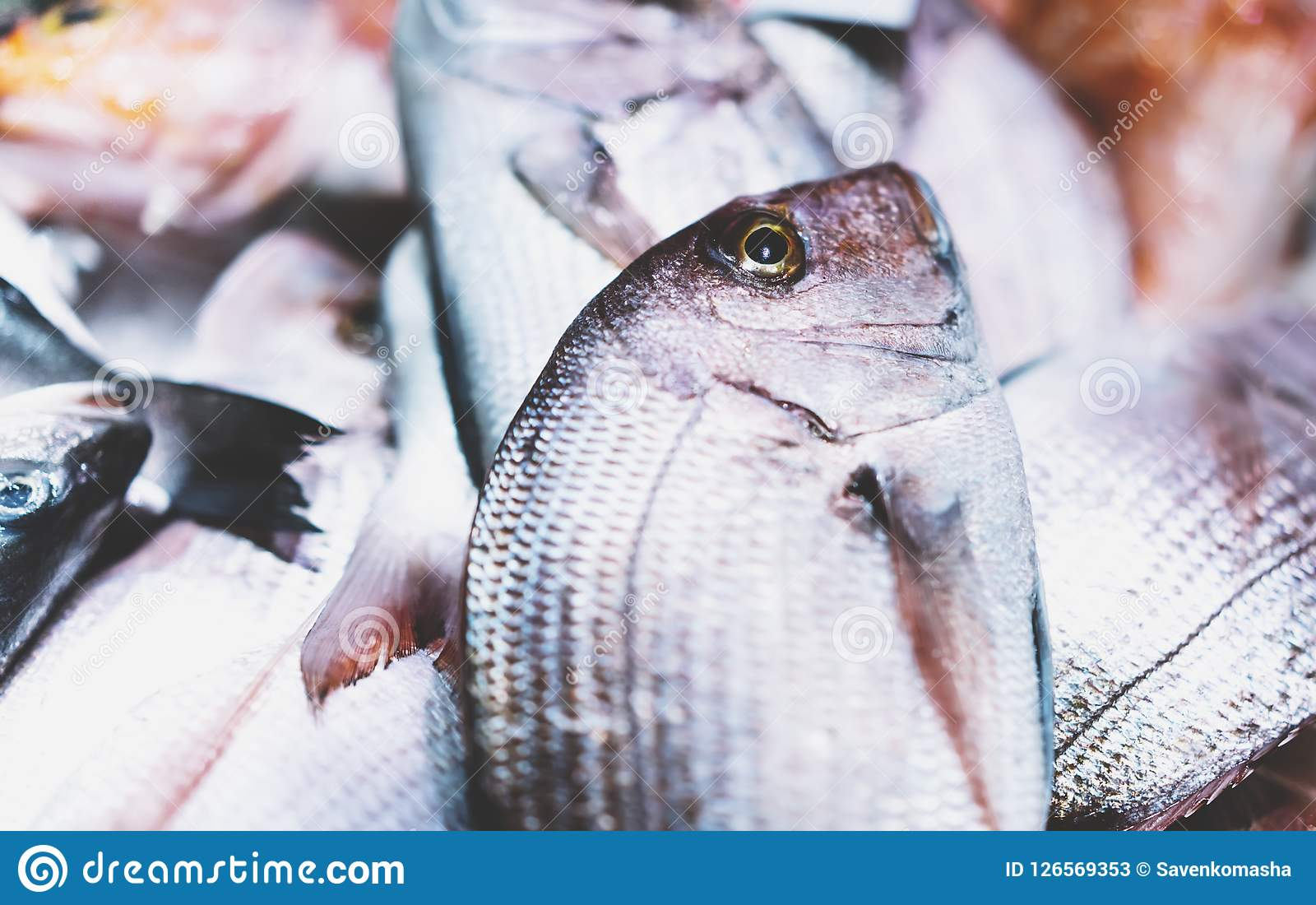 Ptasia dorado ryba na lodowym tle na rynku, closup świezi morscy produkty, pożytecznie żywienioniowy denny jedzenie w restauraci,
