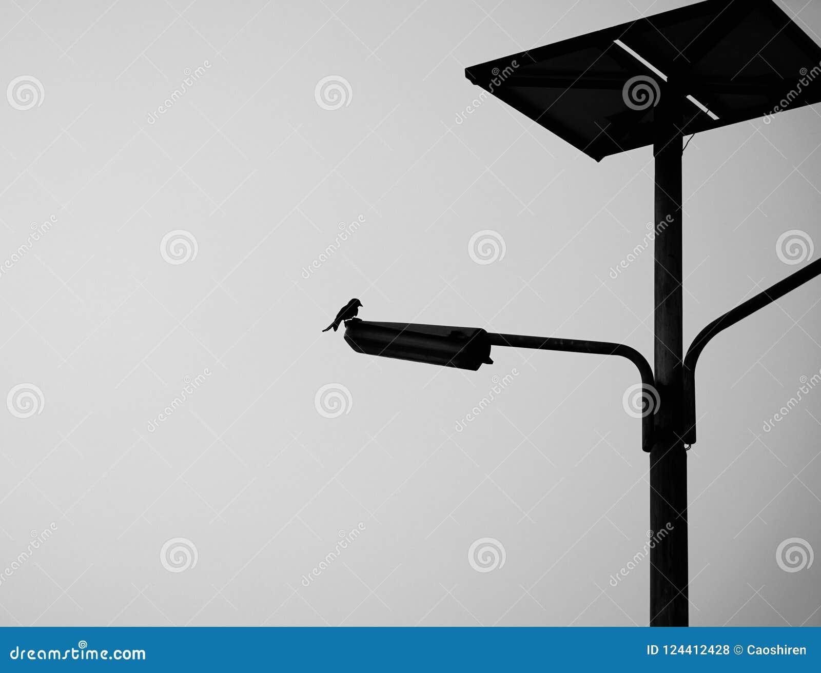 Ptasia pozycja na drogowym świetle