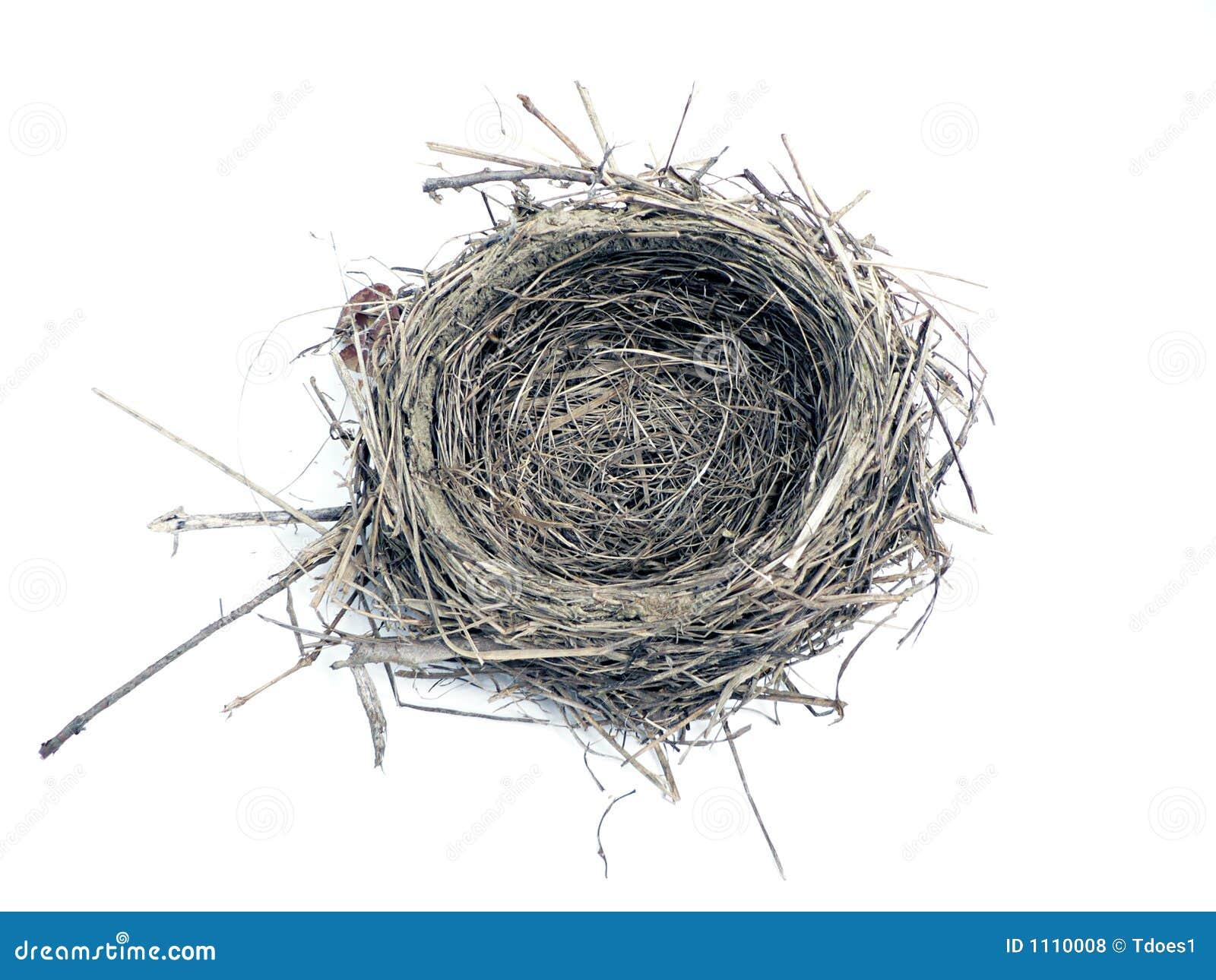 Ptasie gniazdo zdjęcie stock. Obraz złożonej z narodziny - 1110008