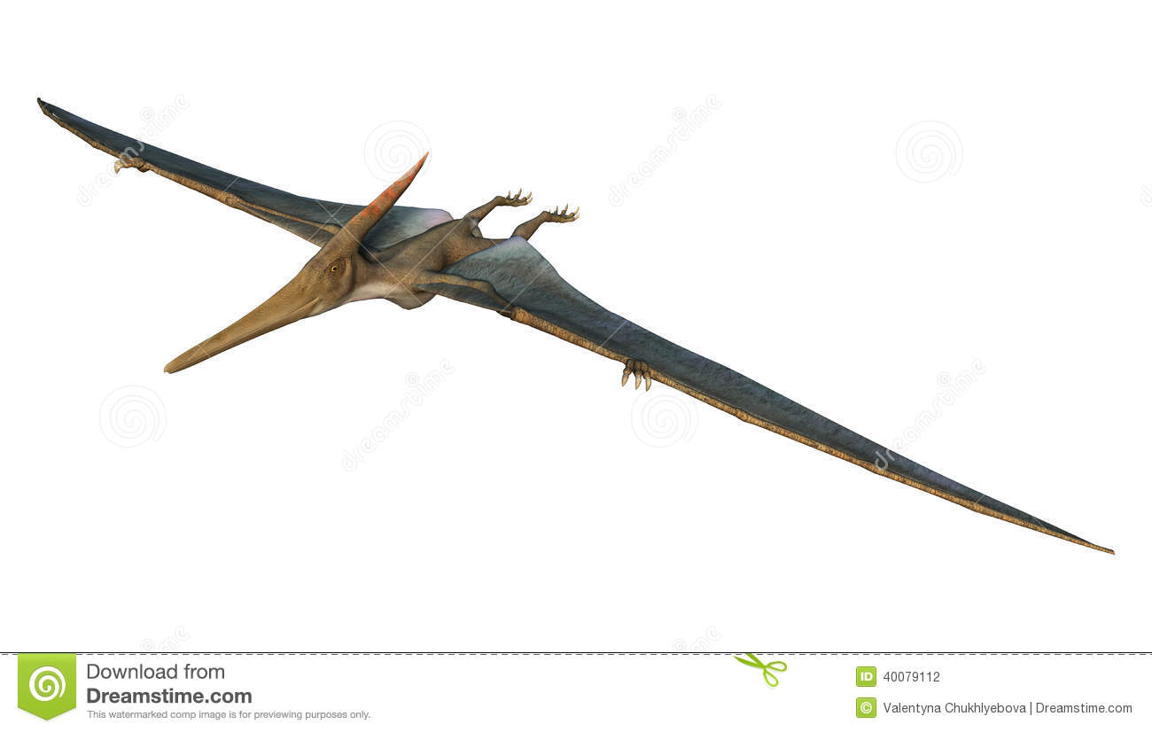 ... prehistoric flying reptile Pteranodon isolated on white background