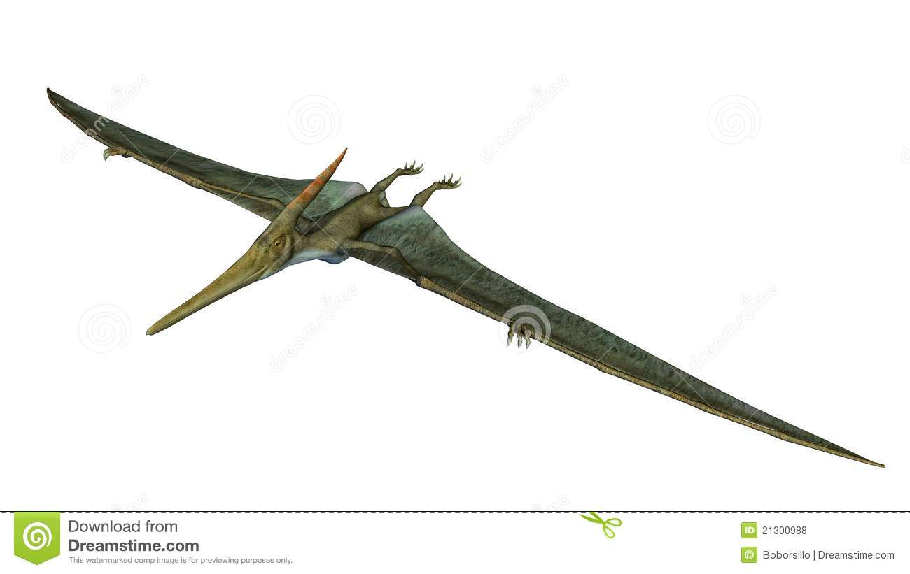 Pteranodon Dinosaur. From the Late Cretaceous geological period of ...