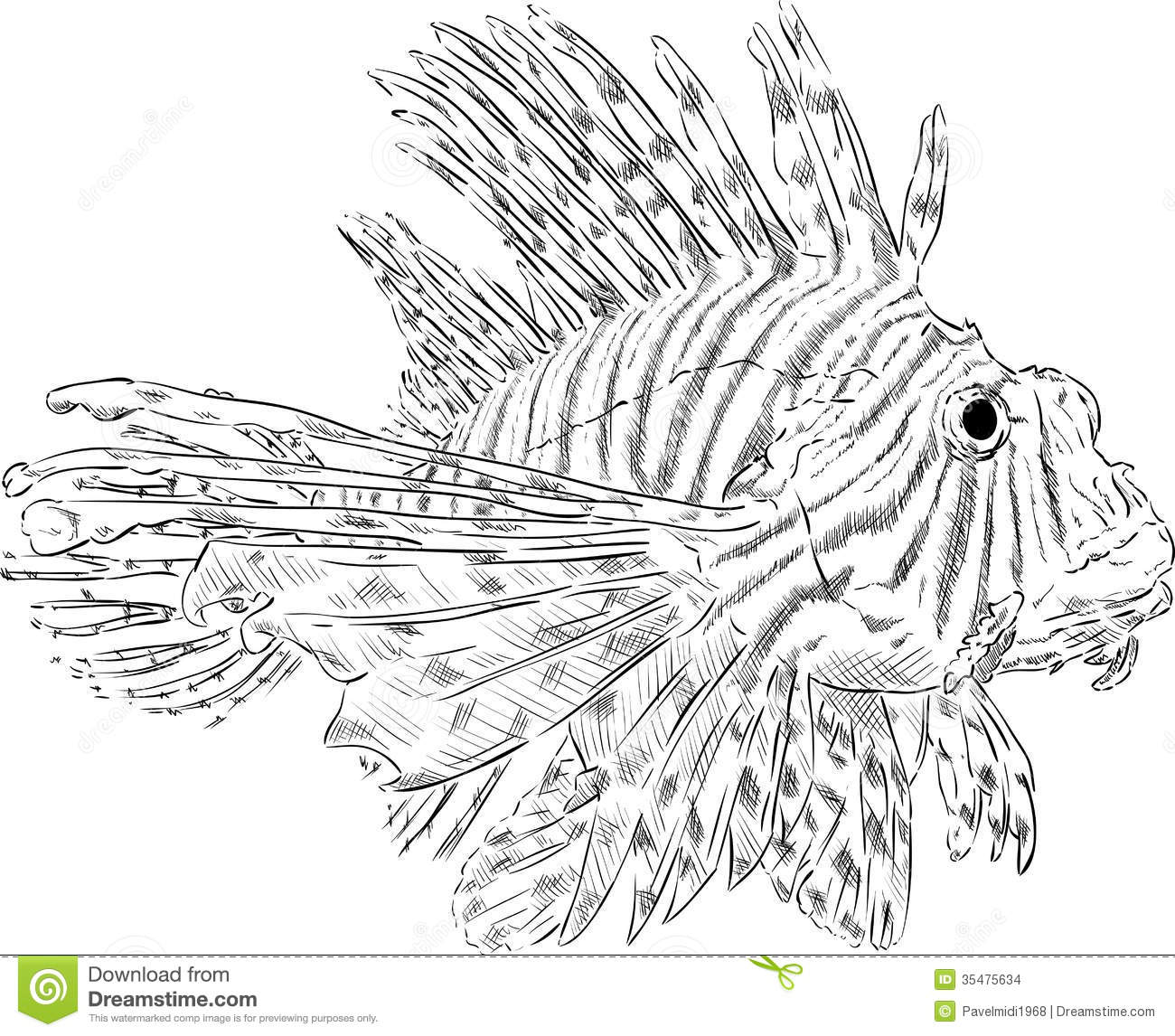 Pterois Volitans Stock Vector Image Of Tail Outline