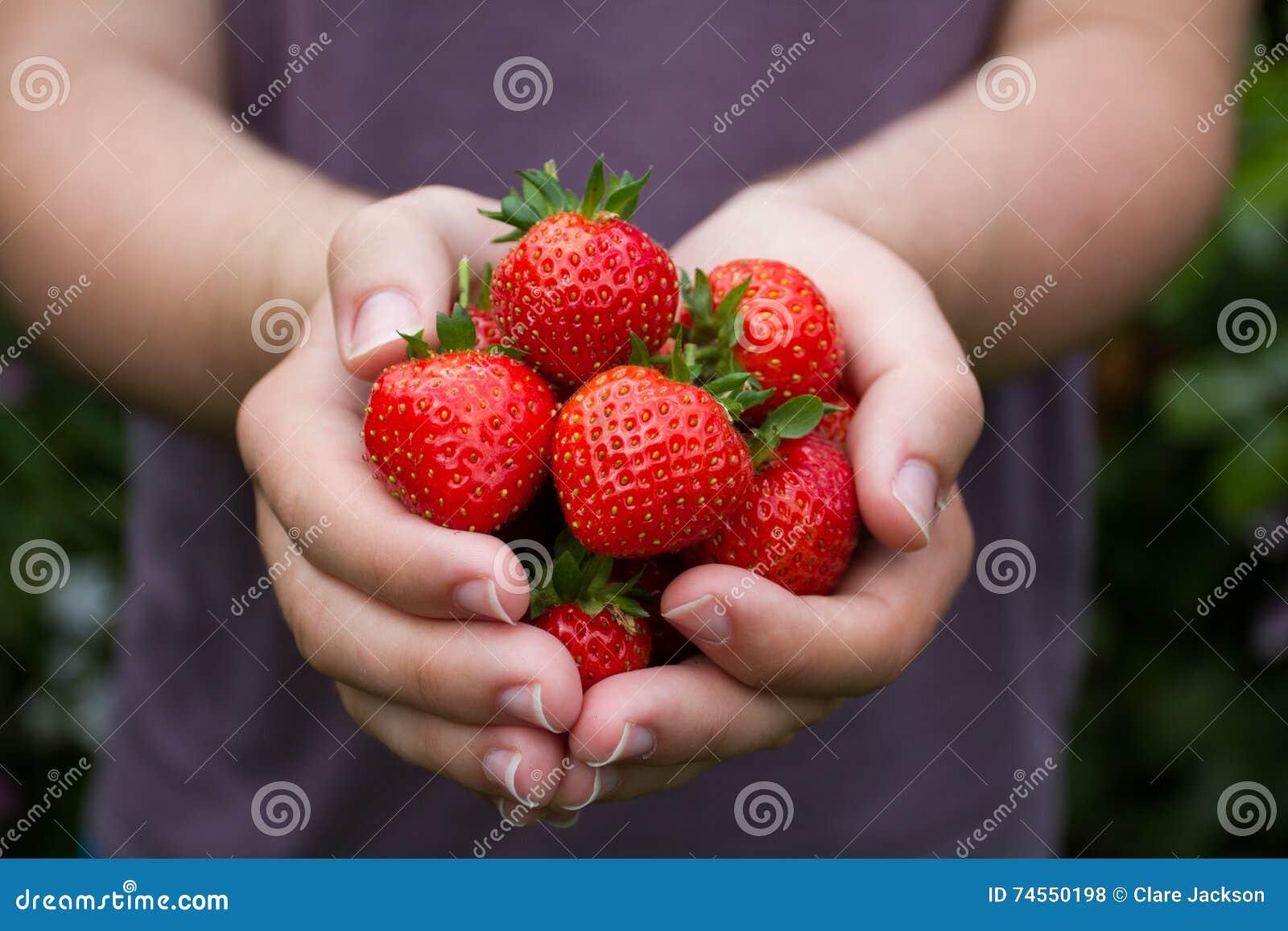 Puñado de fresas maduras del verano