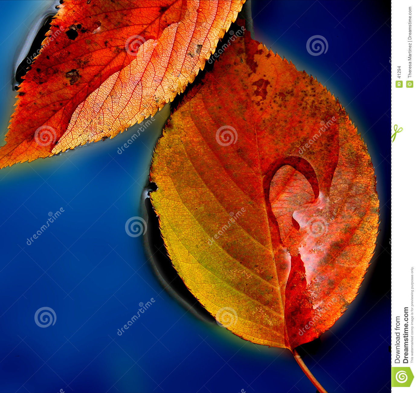 Puddle of Leaves