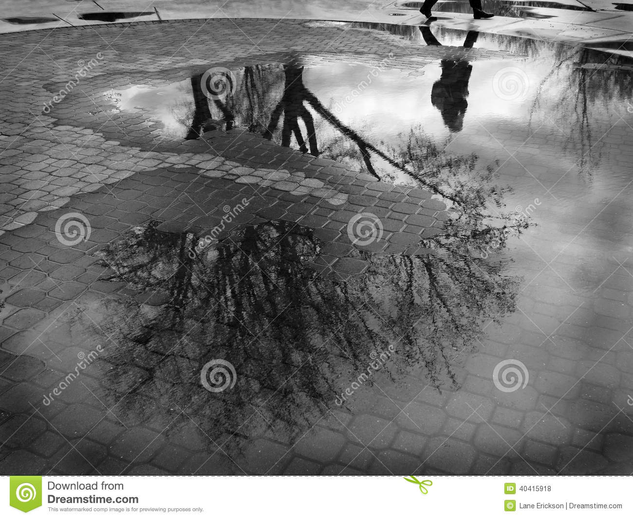 Puddle Reflection of Tree and Person Walking Cobblestone