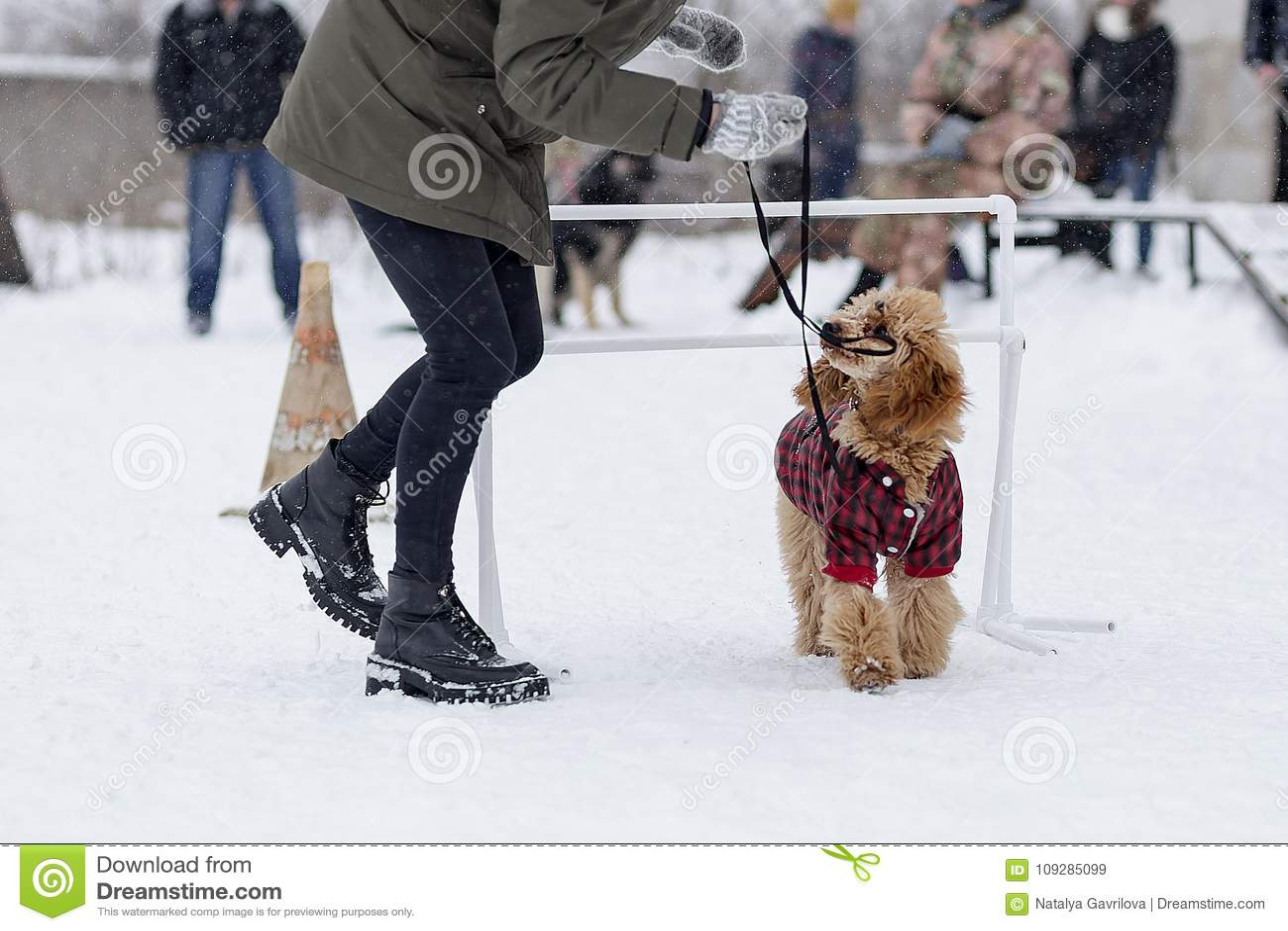 Pudelutbildning på gatan i vinter