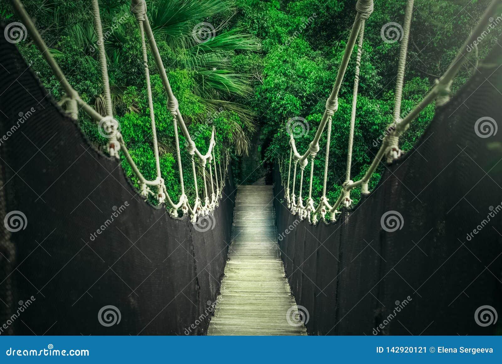 Puente colgante sobre el barranco de la selva, traves?a de la cuerda
