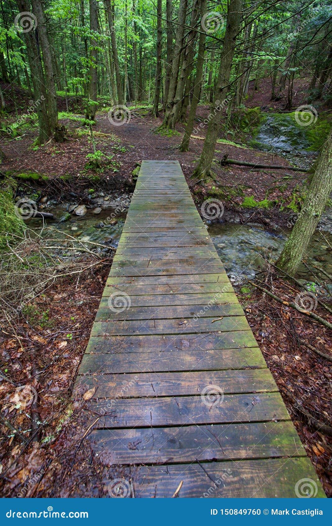 Puente de madera sobre corriente del bosque