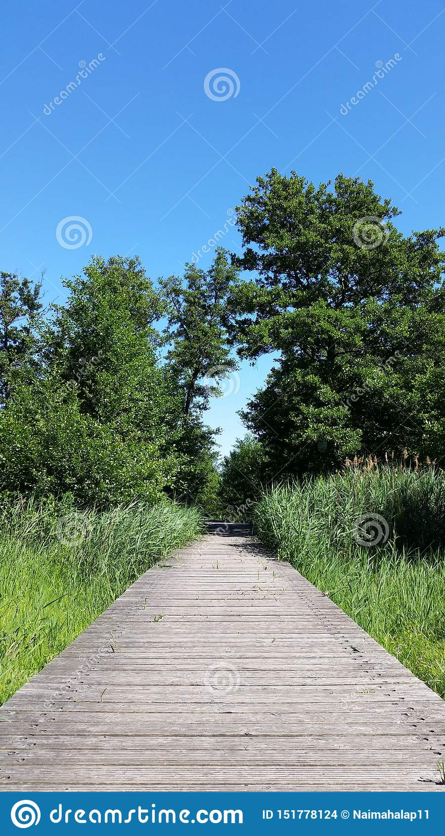 Puente de madera viejo con las cañas jovenes y las hojas verdes