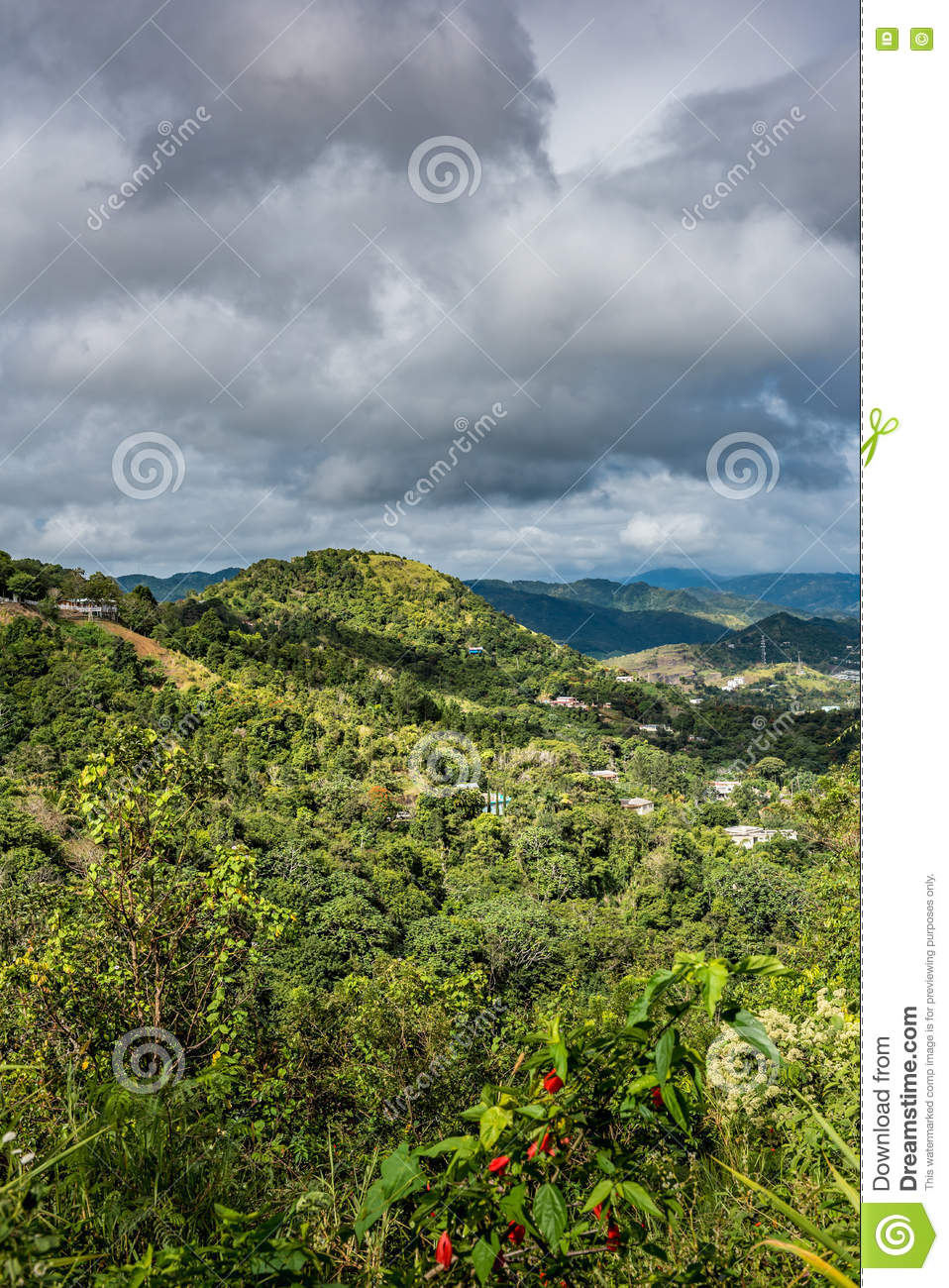 Puerto Rican landscape with houses among the trees