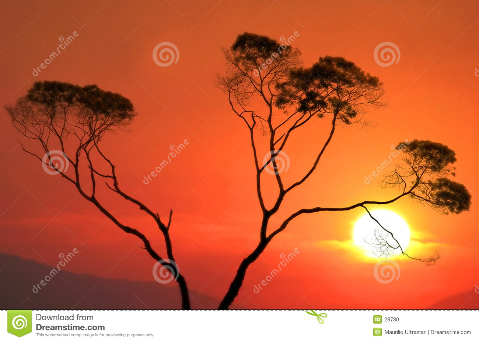 Download Puesta del sol foto de archivo. Imagen de cielo, cubo, árbol - 28780