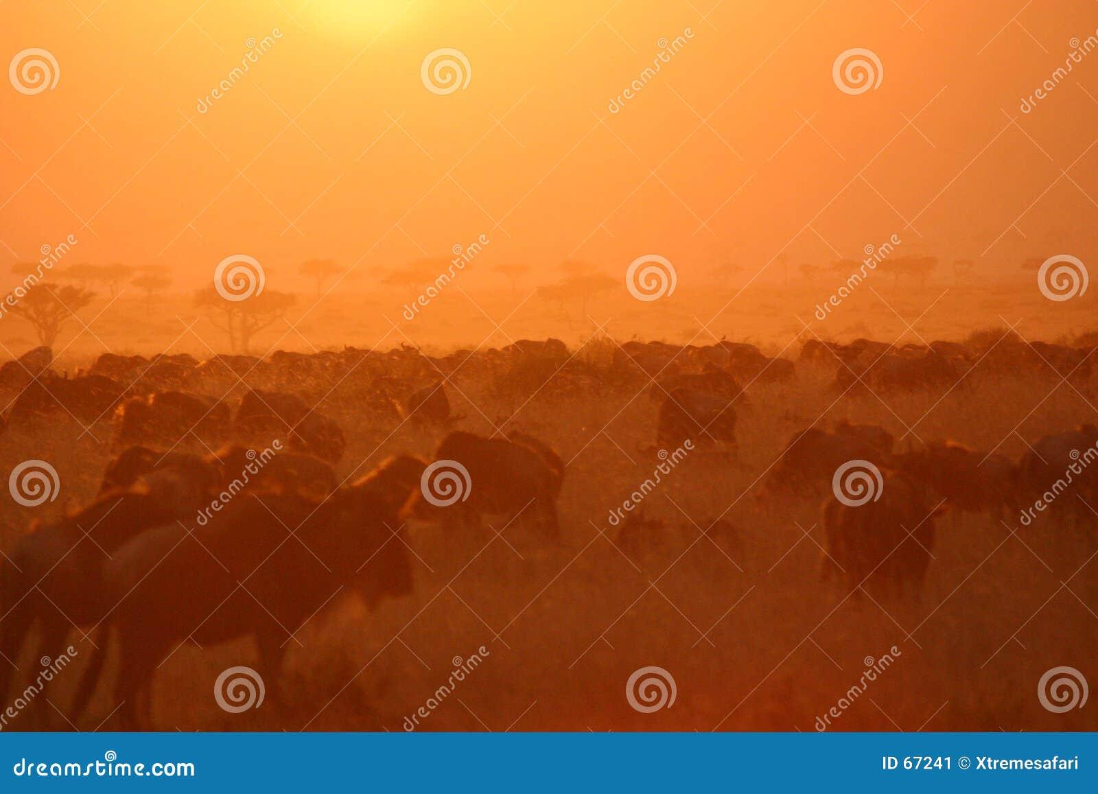 Puesta del sol 7.04 de la migración