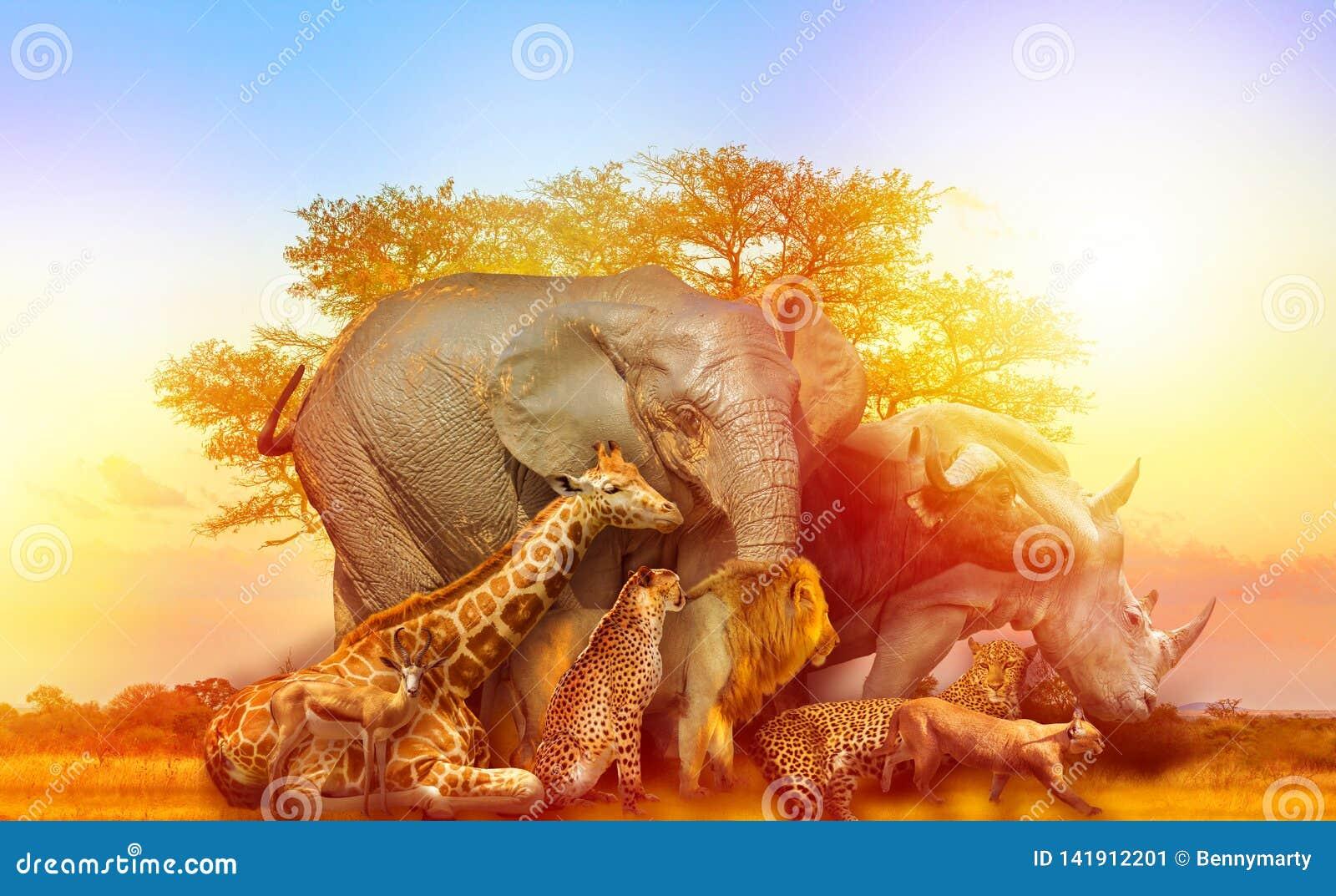Puesta del sol africana del collage de los animales