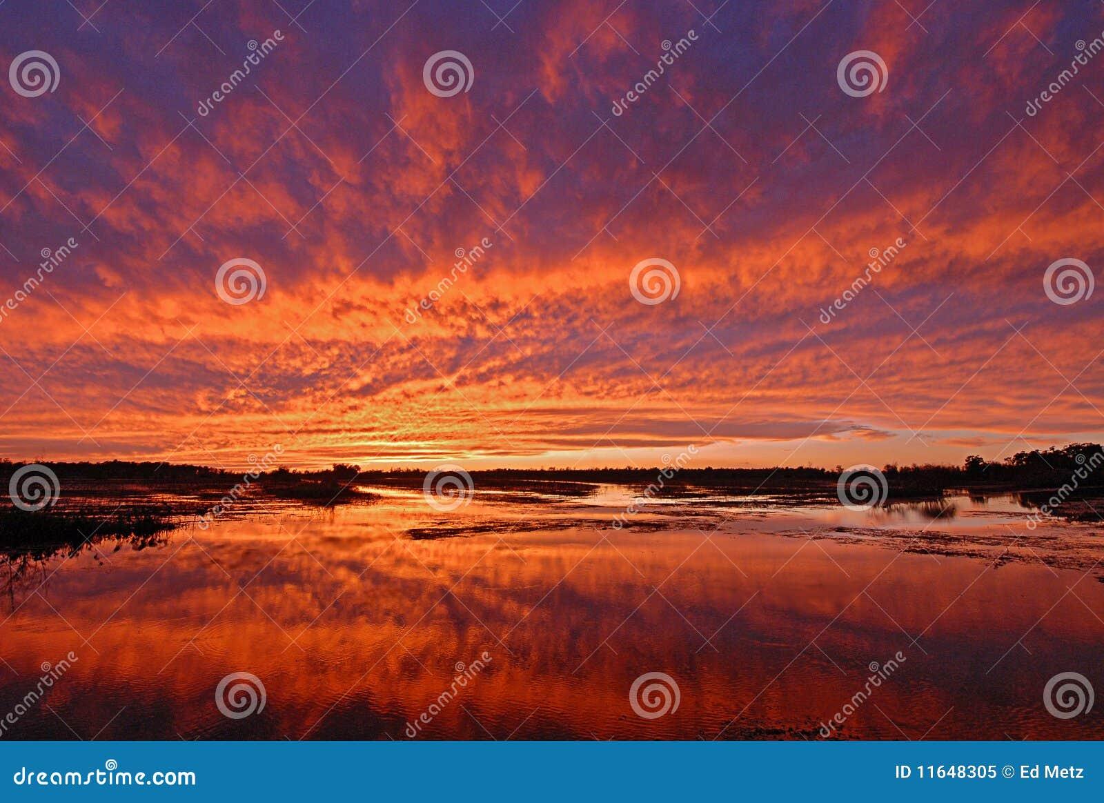 Puesta del sol brillante sobre pantano del humedal