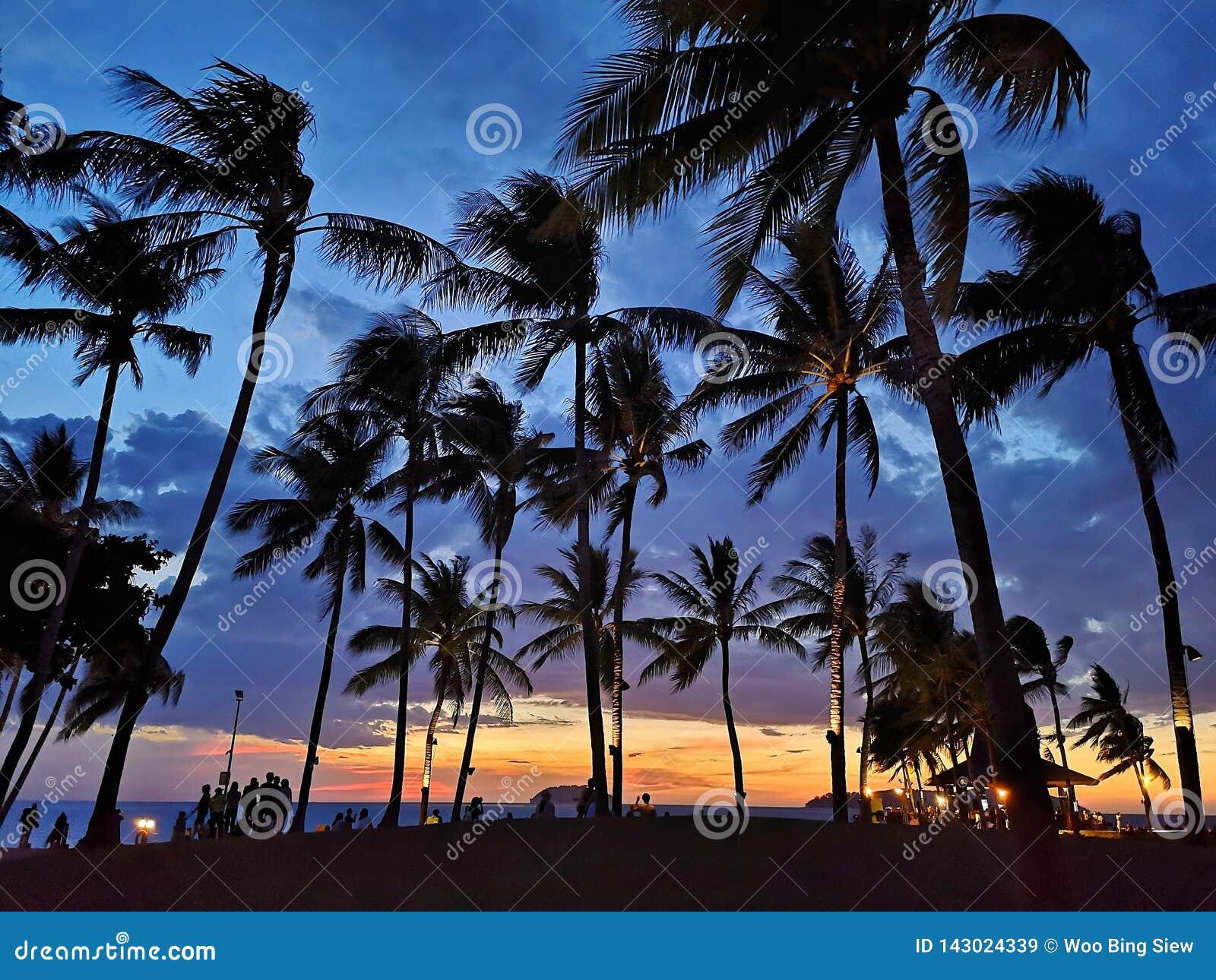 Puesta del sol con los árboles de coco