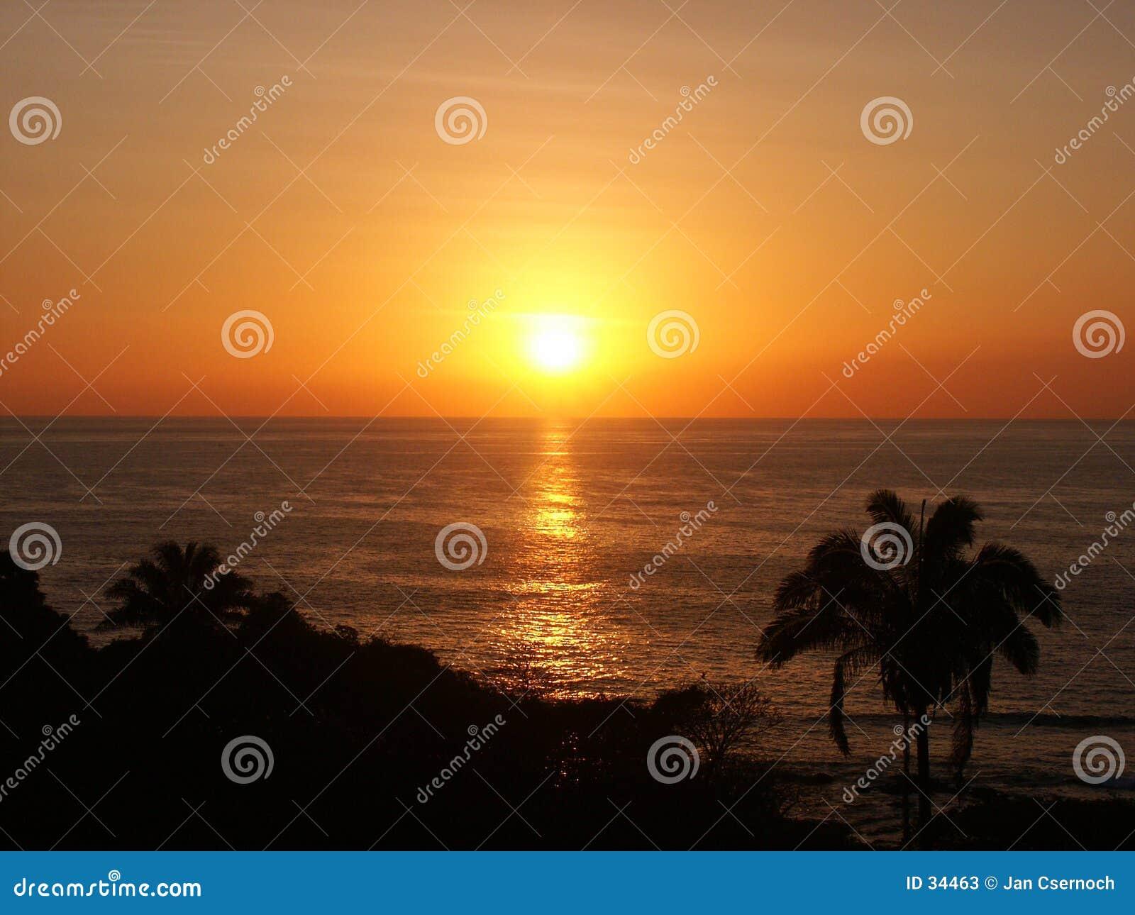 Puesta del sol con palmtrees