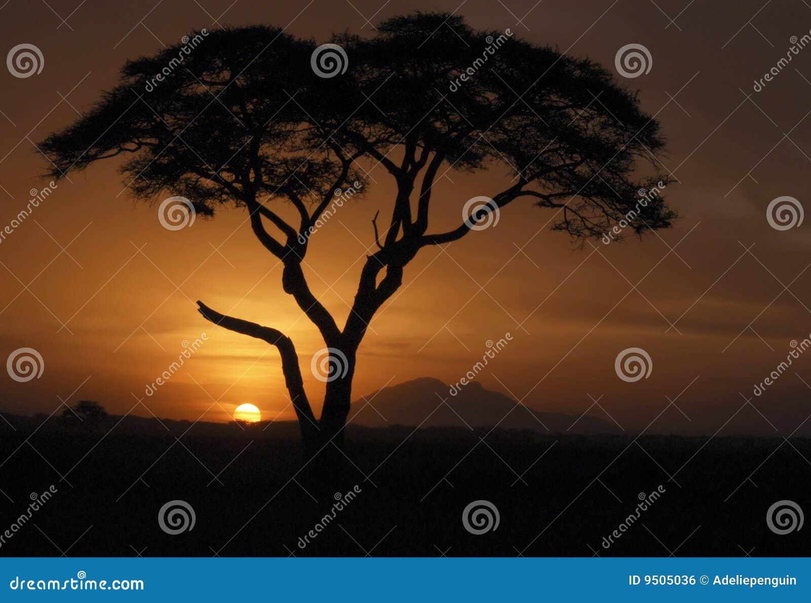 Puesta del sol de Amboseli
