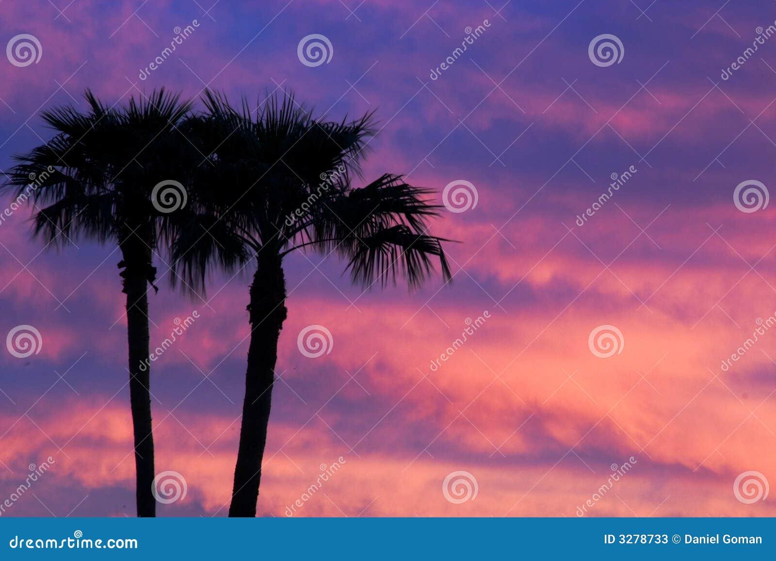 Puesta del sol de la palmera