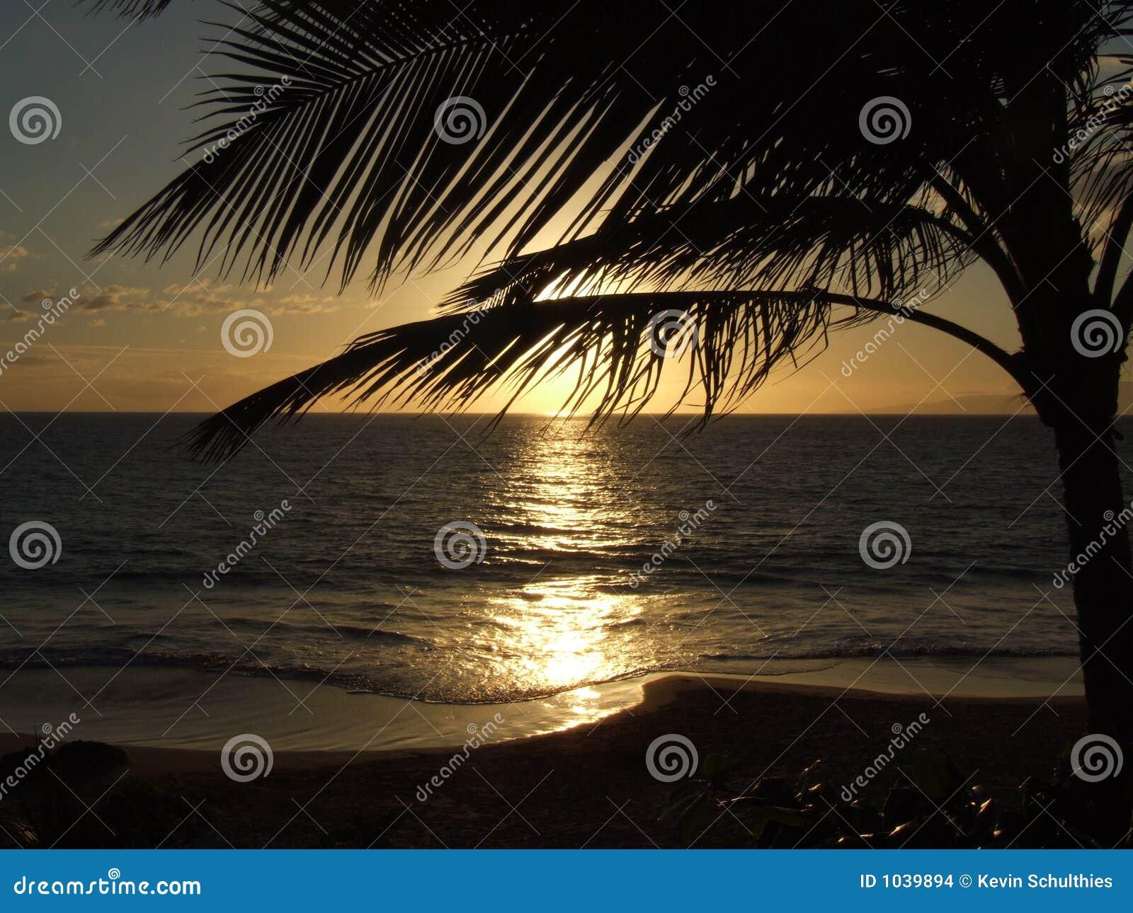 Puesta del sol de la palmera de Hawaii