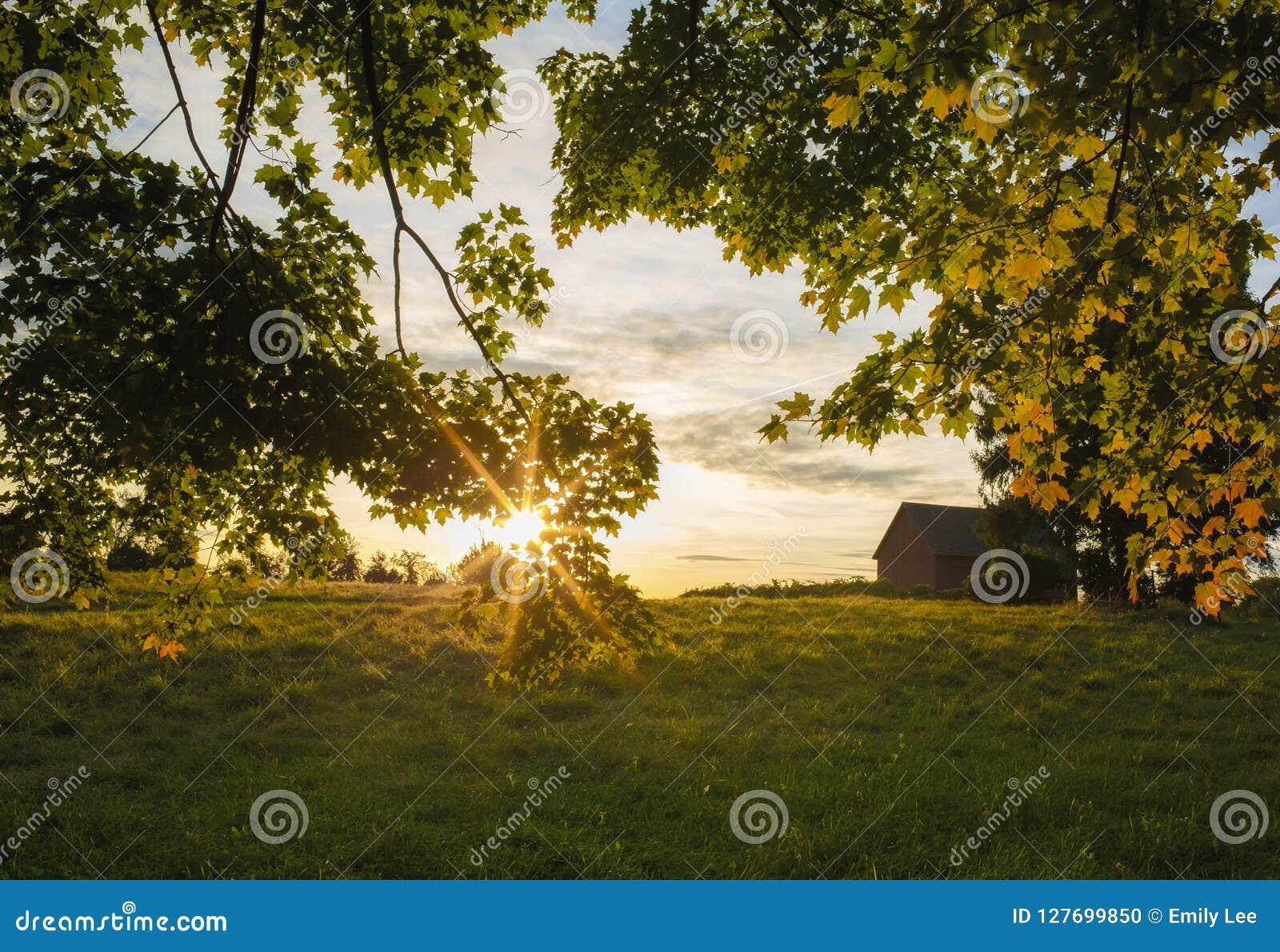 Puesta del sol de la tarde de la caída con las hojas de arce