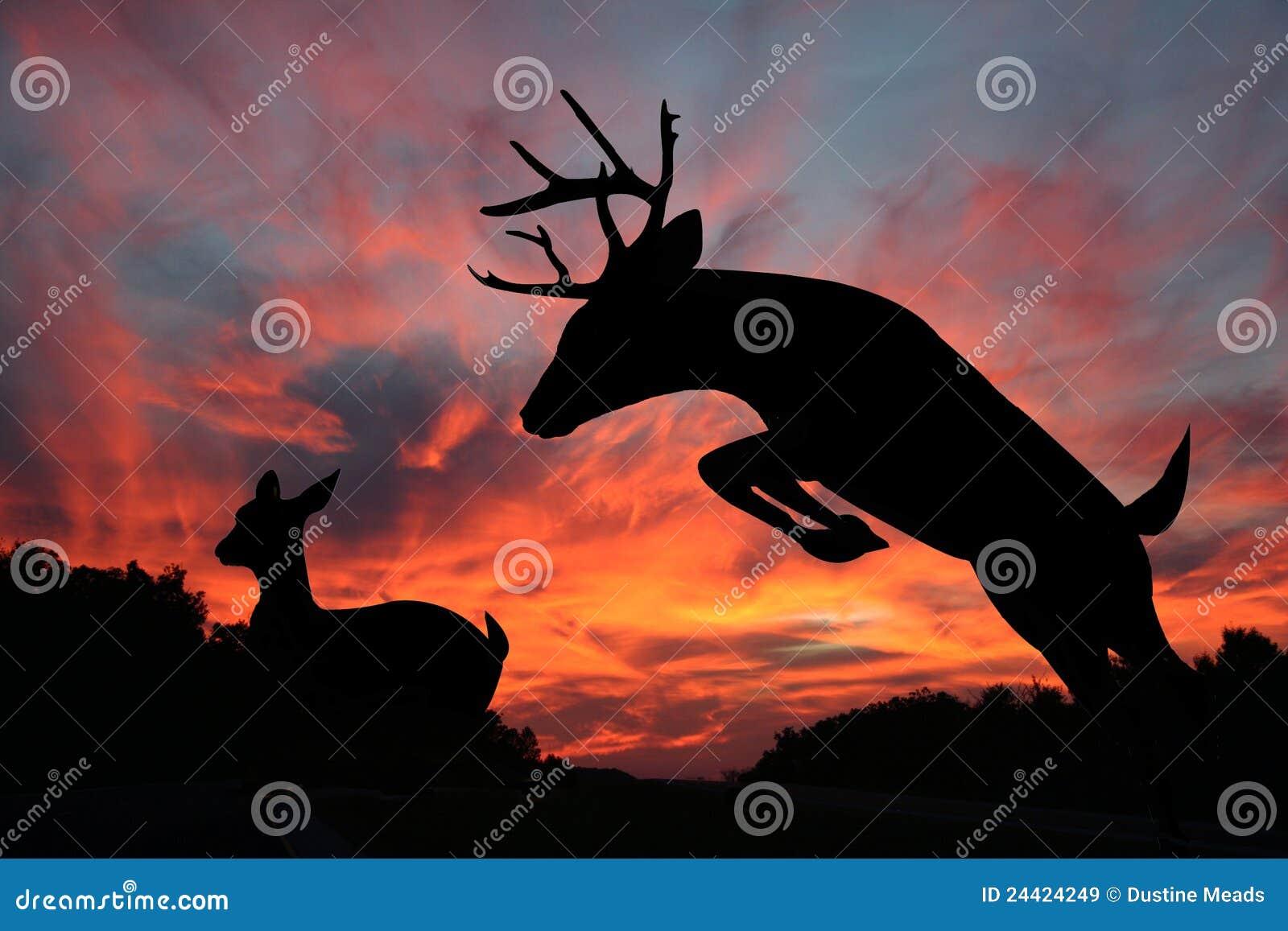 Puesta del sol de los ciervos - gama del Whitetail y dólar del salto