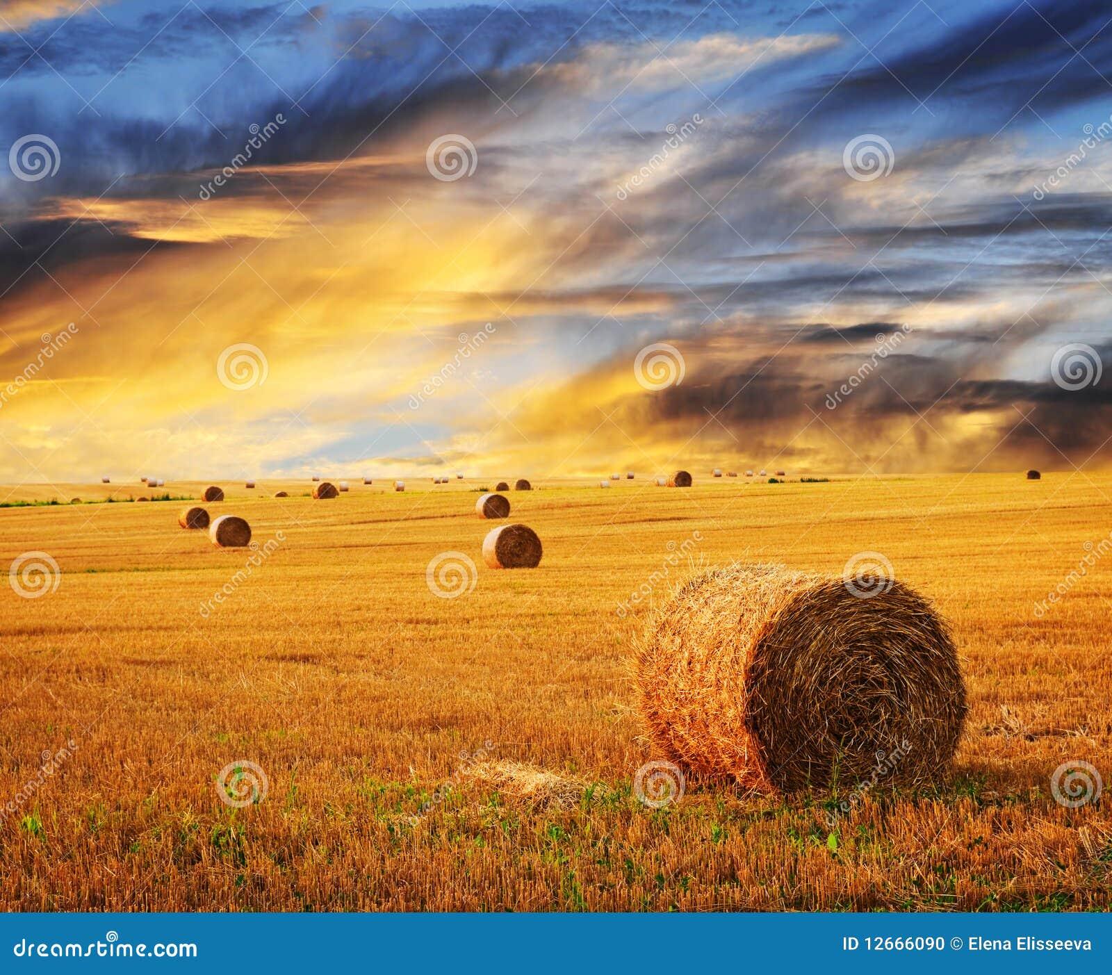 Puesta del sol de oro sobre campo de granja