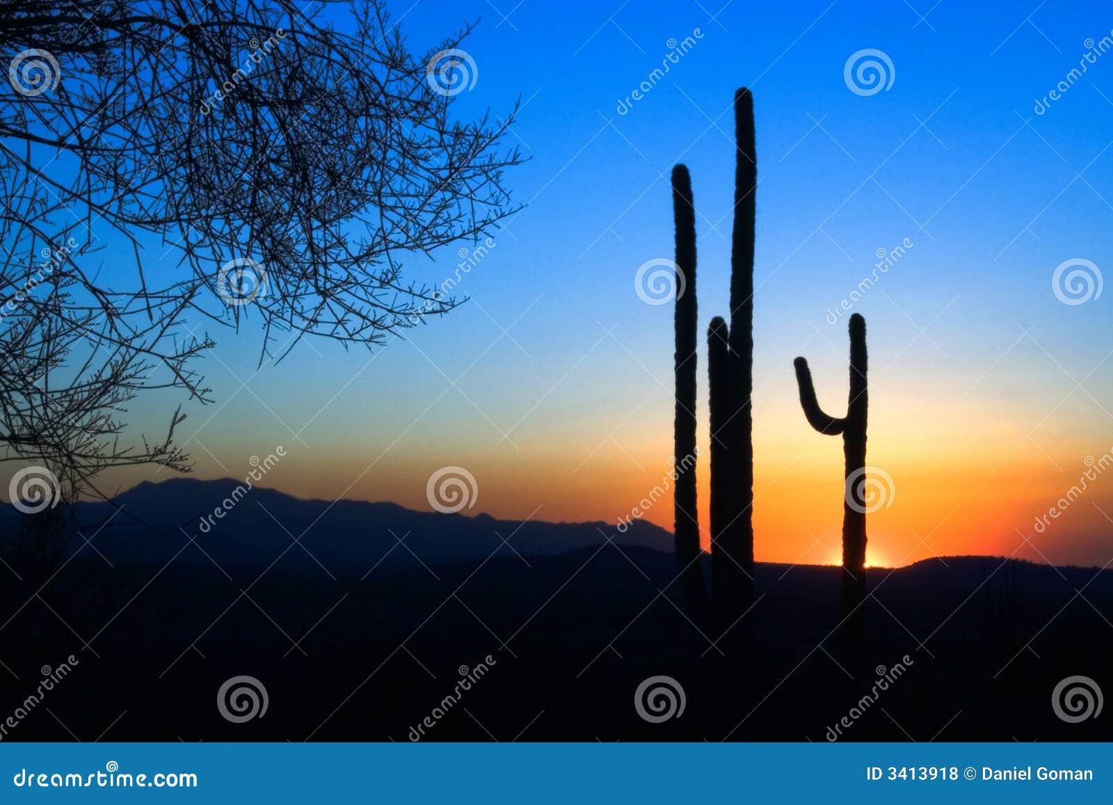 Puesta del sol del cacto del Saguaro
