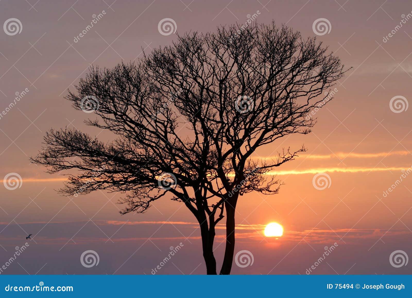Puesta del sol del invierno