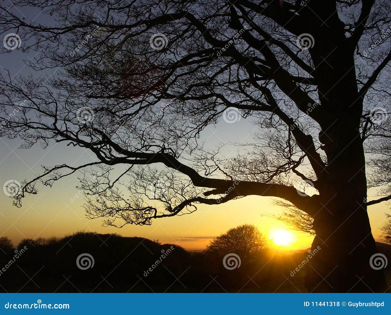 Puesta del sol detrás de un árbol