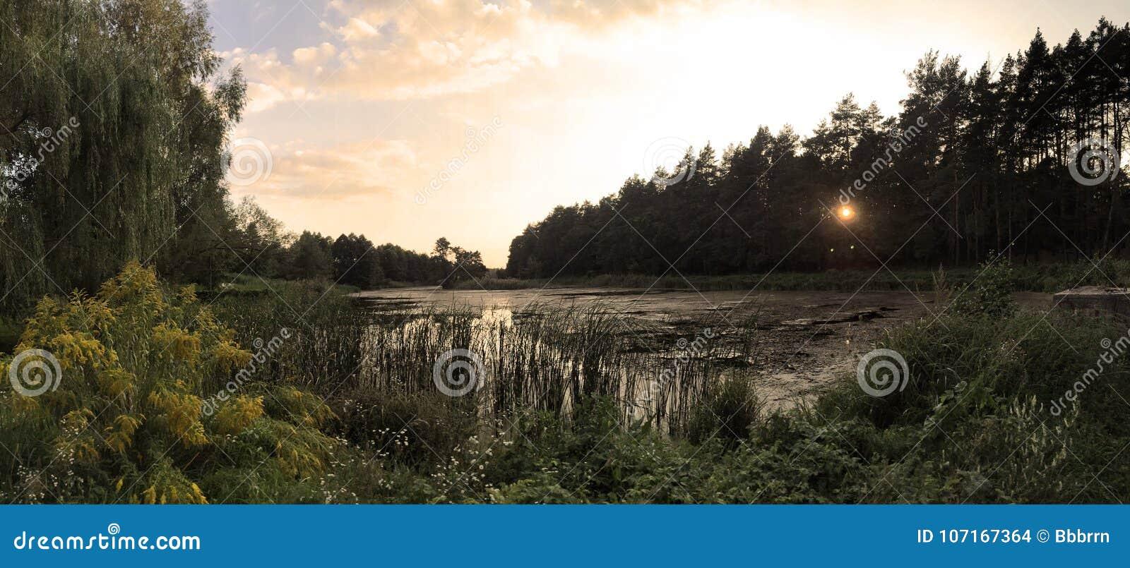 Puesta del sol en el lago rodeado por los árboles