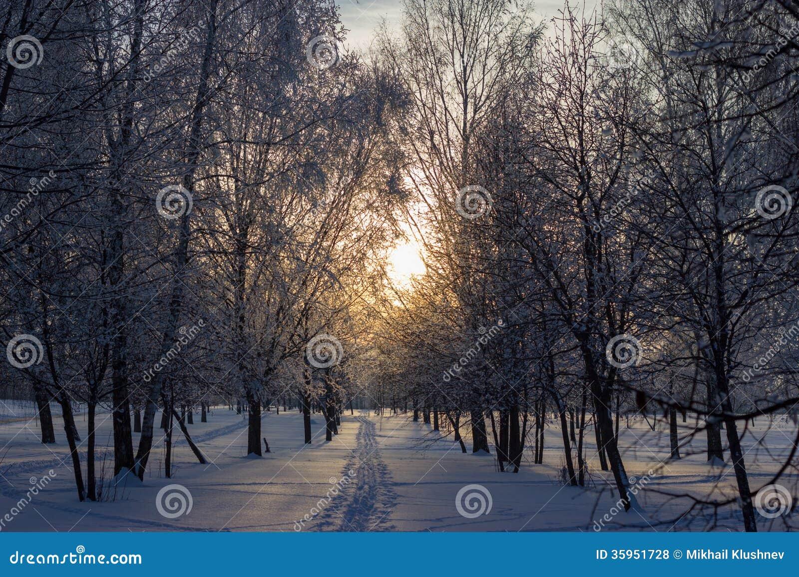 Puesta del sol en el parque del invierno.
