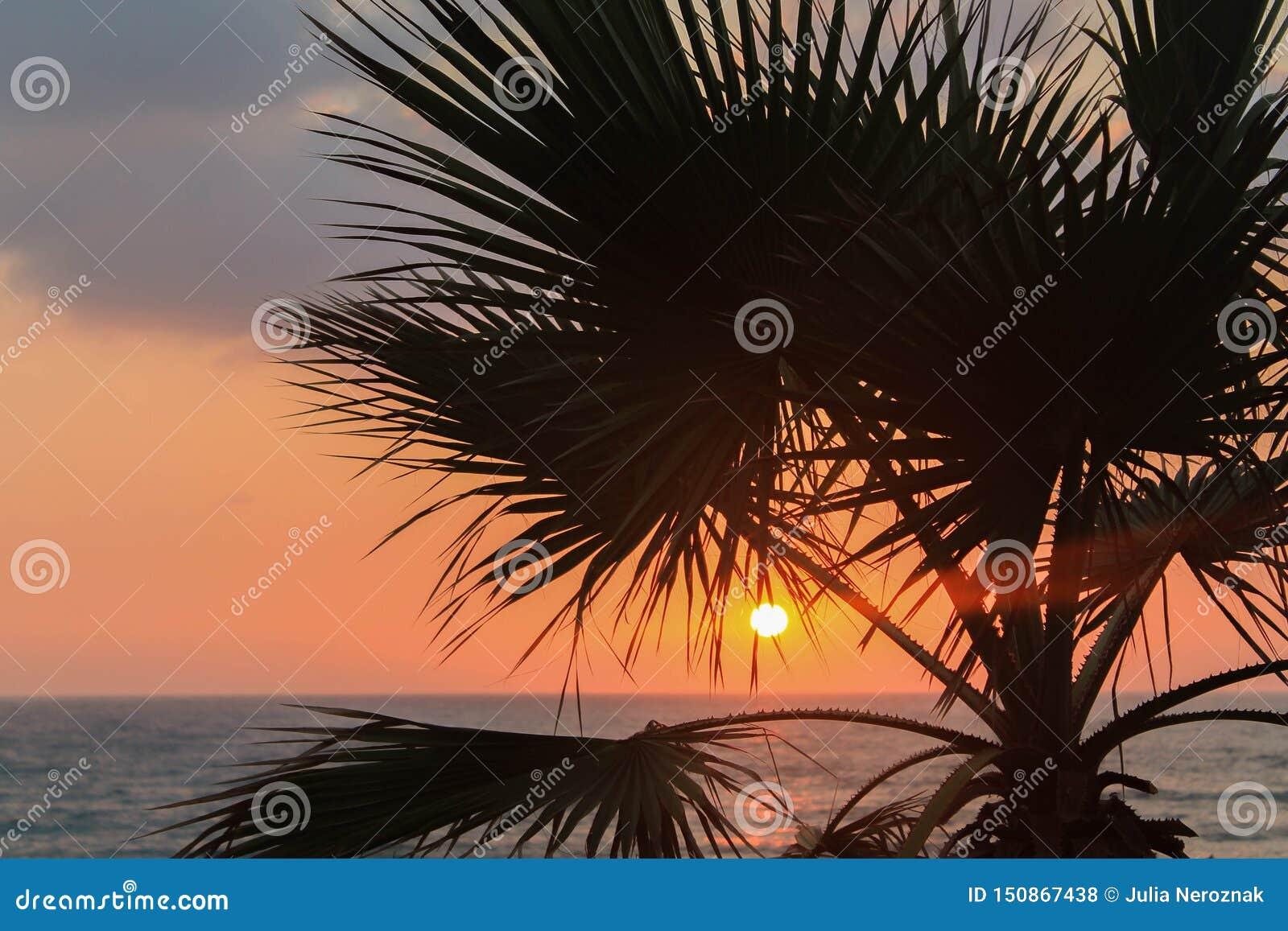 Puesta del sol en la playa con la palmera