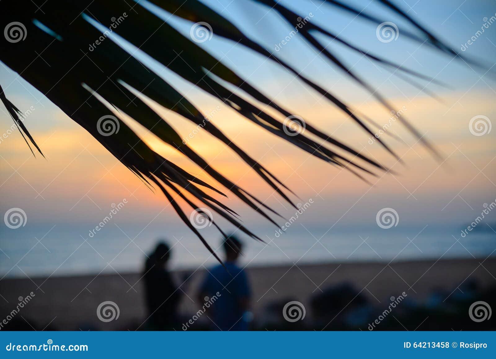 Puesta del sol en la playa a través de las hojas de la palmera