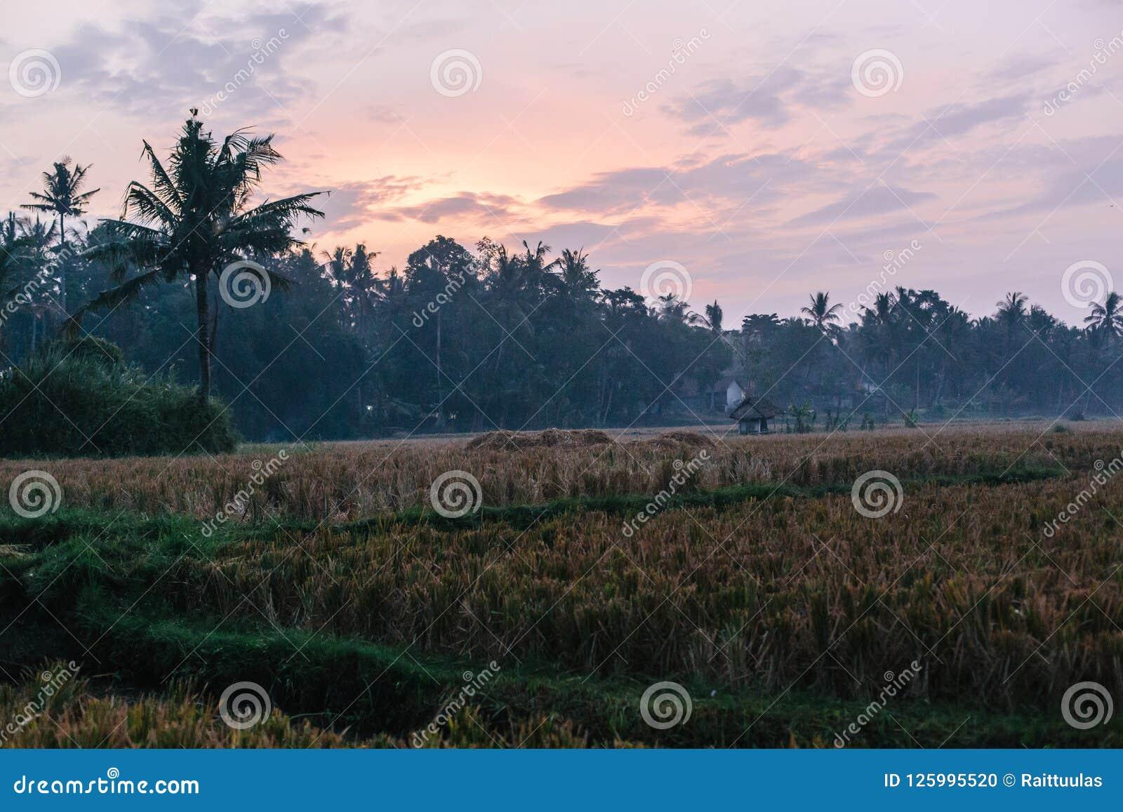 Puesta Del Sol En Los Campos Del Arroz De Ubud En Bali