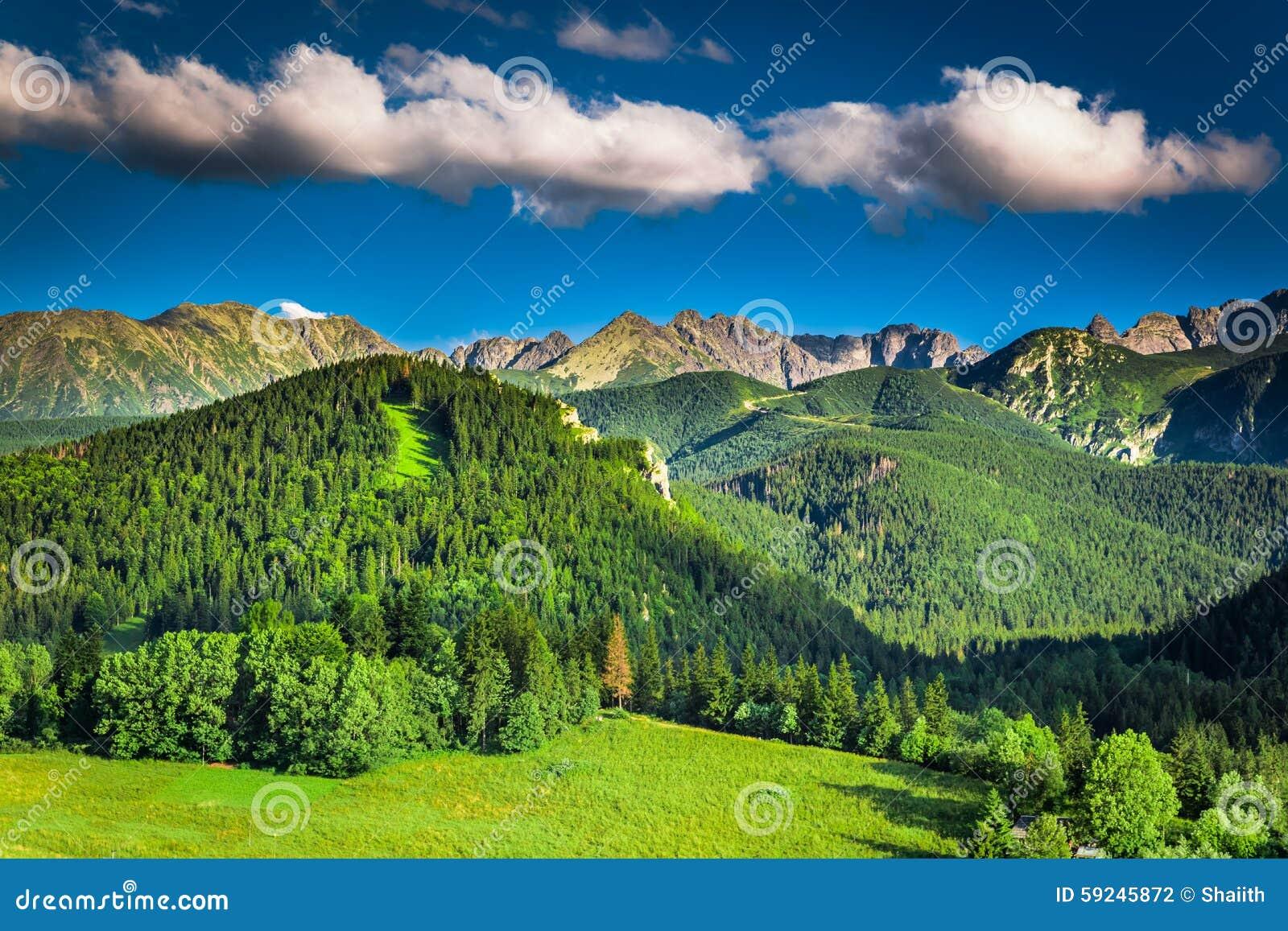 Download Puesta Del Sol En Montañas En Verano Foto de archivo - Imagen de montaña, hierba: 59245872