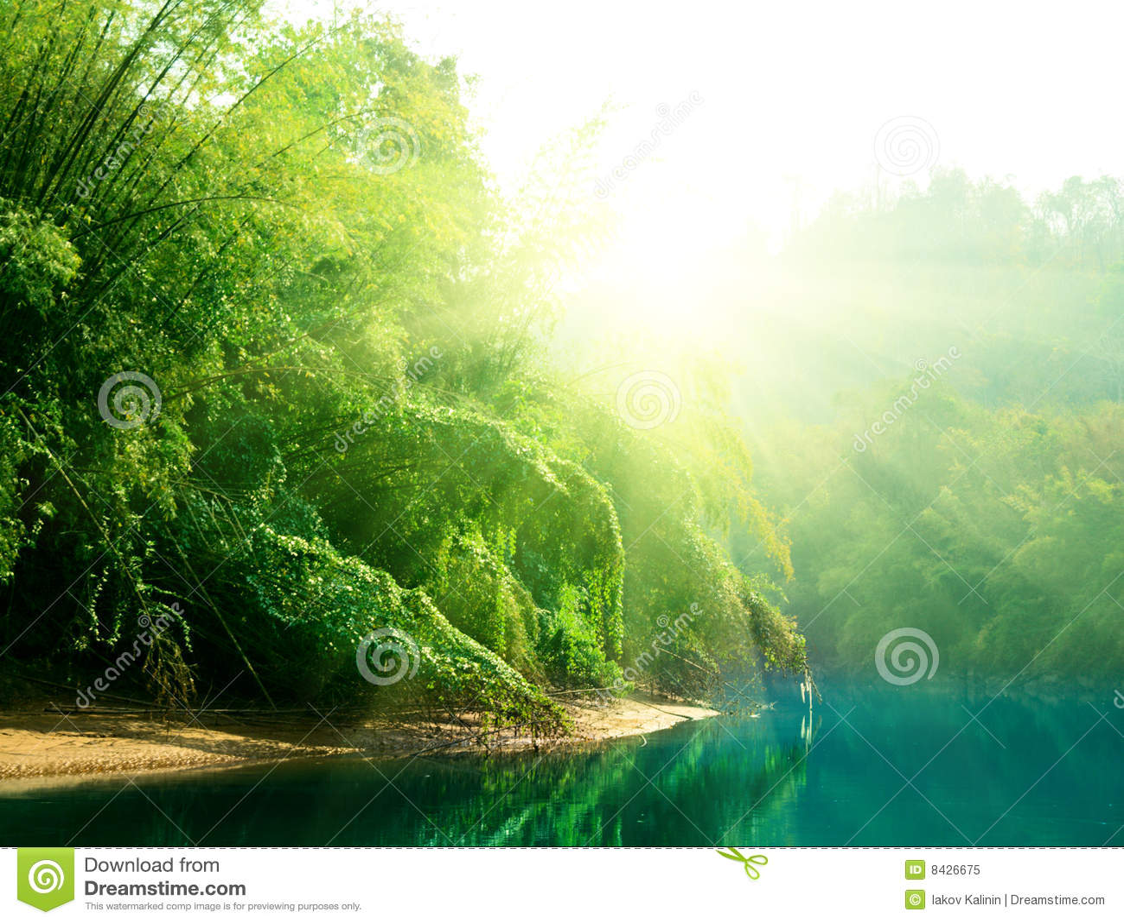 Puesta del sol en selva