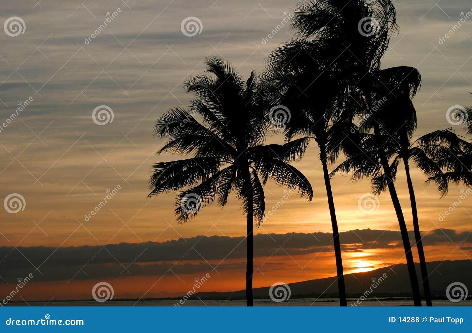 Puesta del sol hawaiana viva