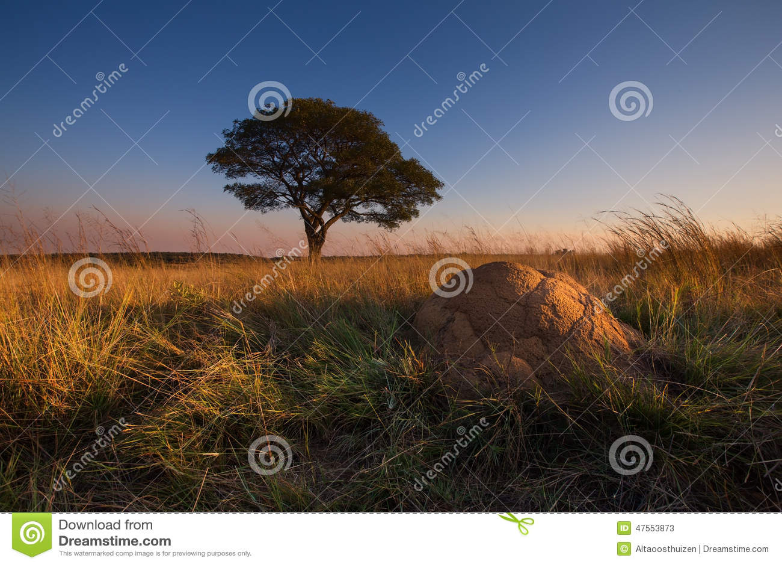 Puesta del sol mágica en África con un árbol solitario en la colina y ningunas nubes