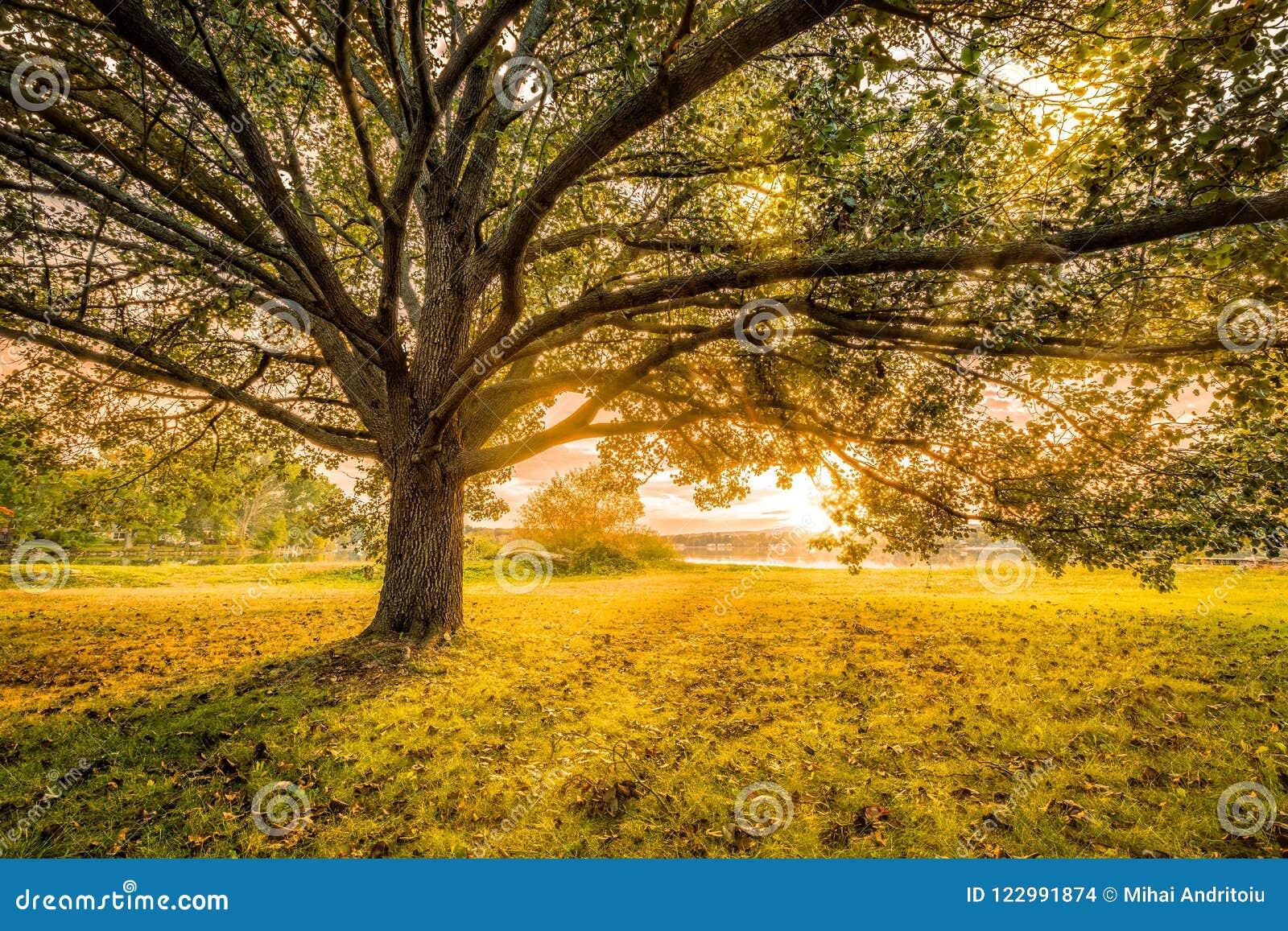Puesta del sol del otoño en Parsippany, New Jersey