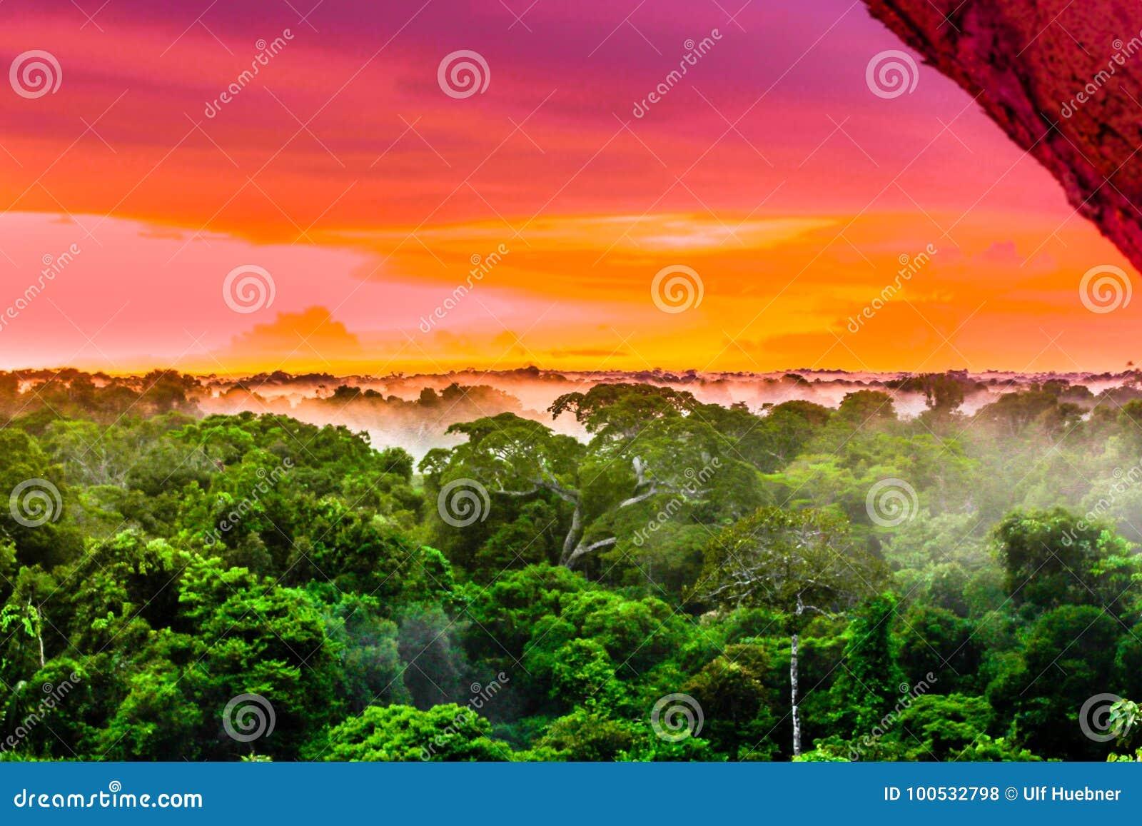 Download Puesta Del Sol Púrpura Sobre La Selva Tropical Brasileña En La Región Del Amazonas Foto de archivo - Imagen de selva, señal: 100532798