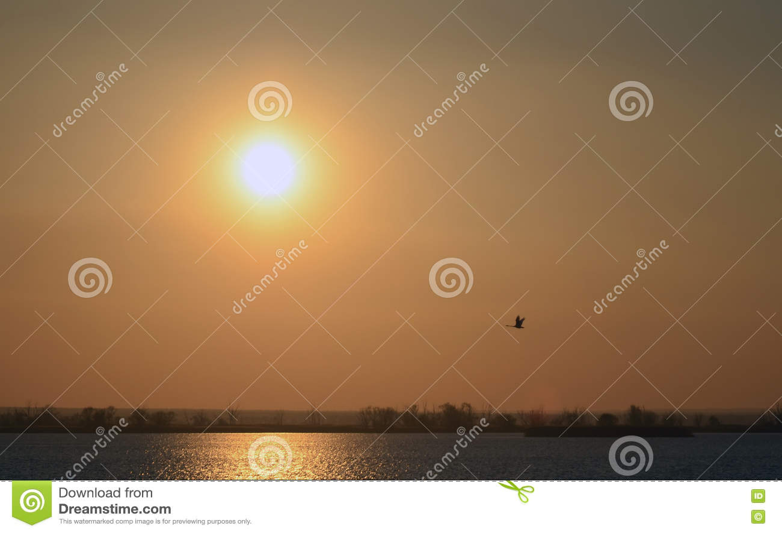 Puesta del sol roja del fondo abstracto en el sol del río y el pájaro de vuelo brillantes en cielo