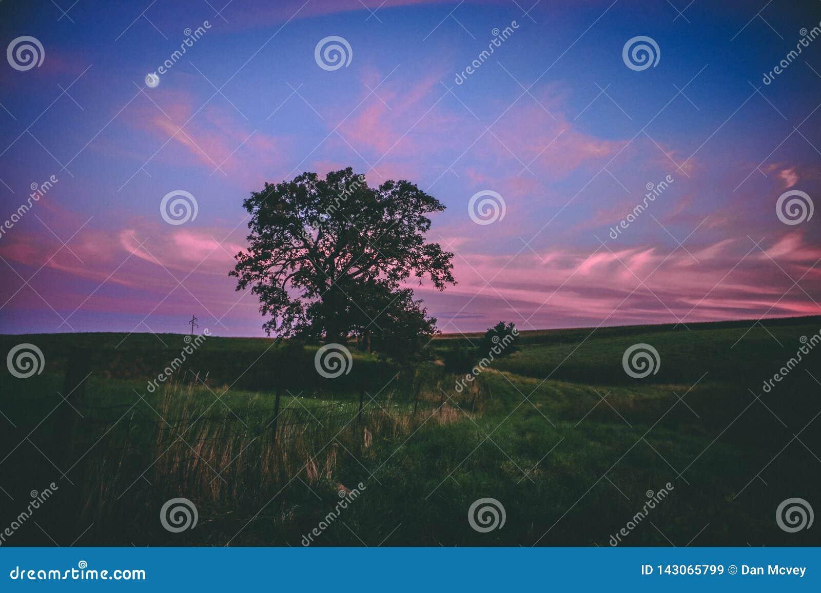 Puesta del sol sobre árbol épico en Cercano oeste