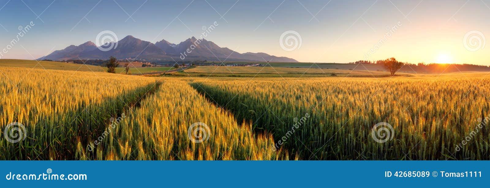 Puesta del sol sobre campo de trigo con la trayectoria en la montaña de Eslovaquia Tatra