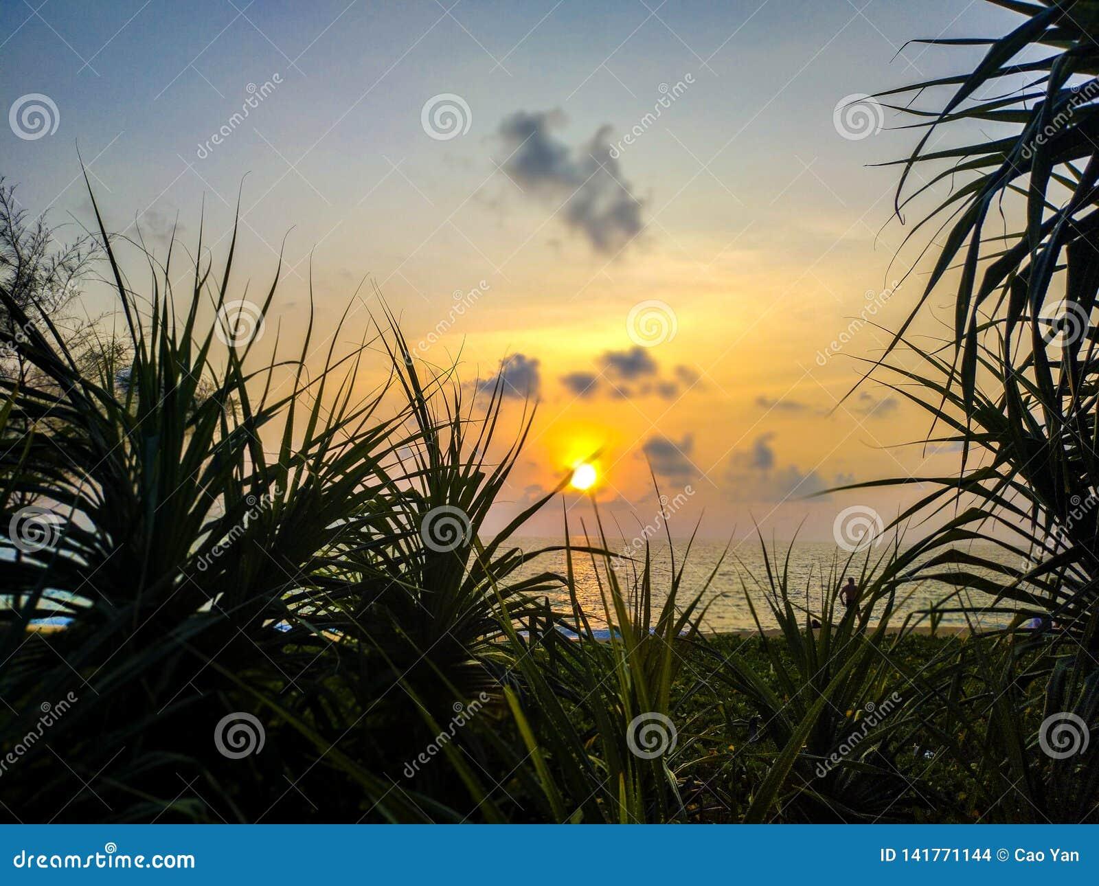 Puesta del sol sobre el mar y el pino