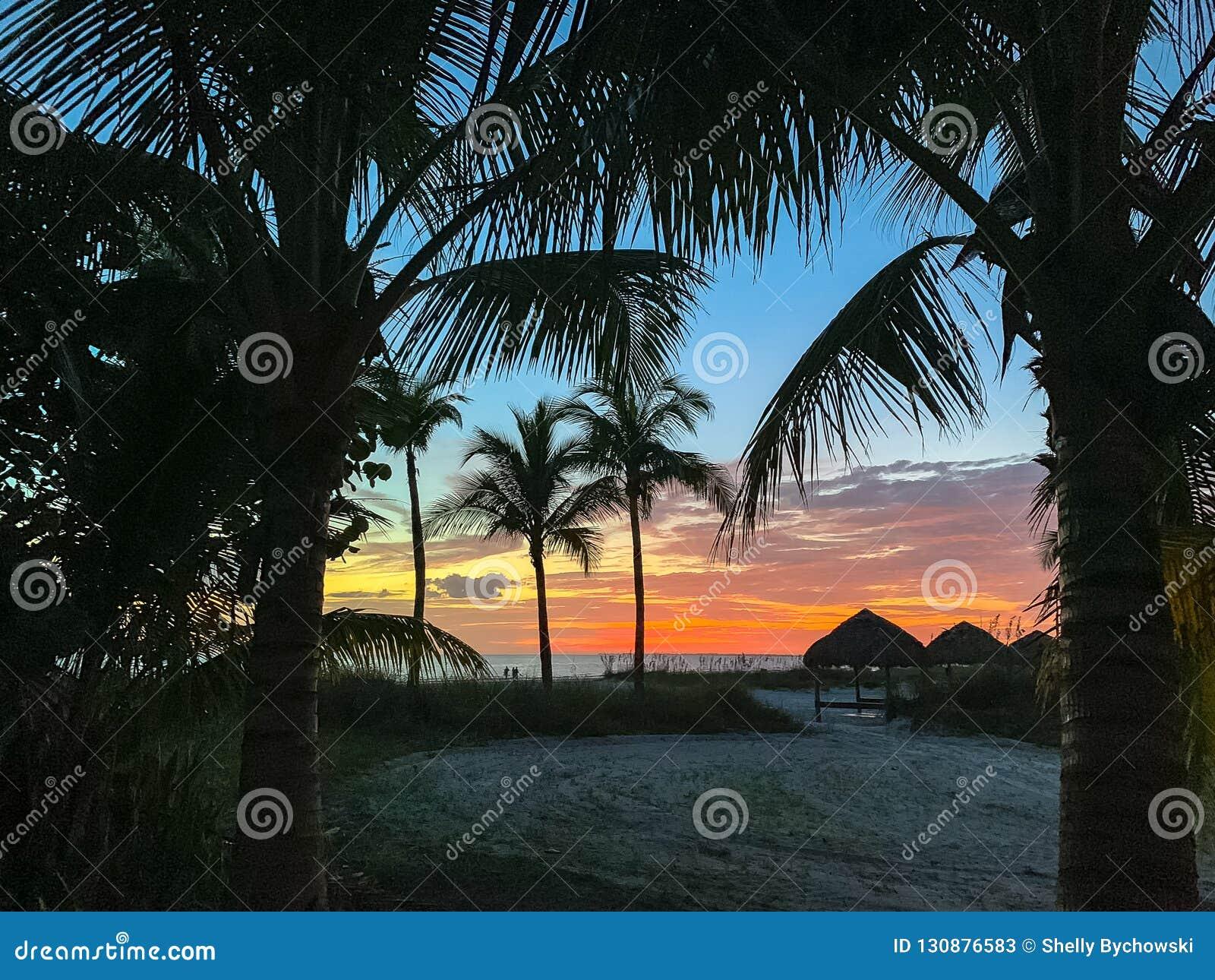 Puesta del sol a través de las palmeras con la opinión el Golfo de México y su