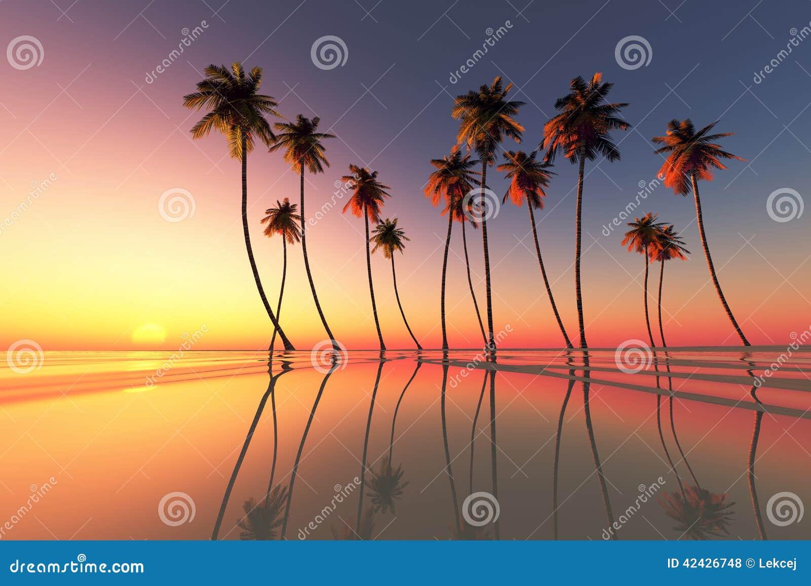 Puesta del sol tropical dramática