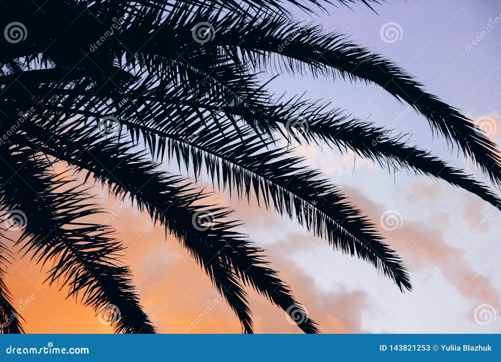 Puesta del sol tropical y fondo vivo de las hojas de palma