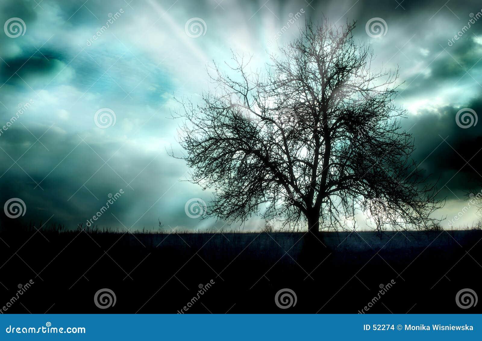 Puesta del sol y un árbol