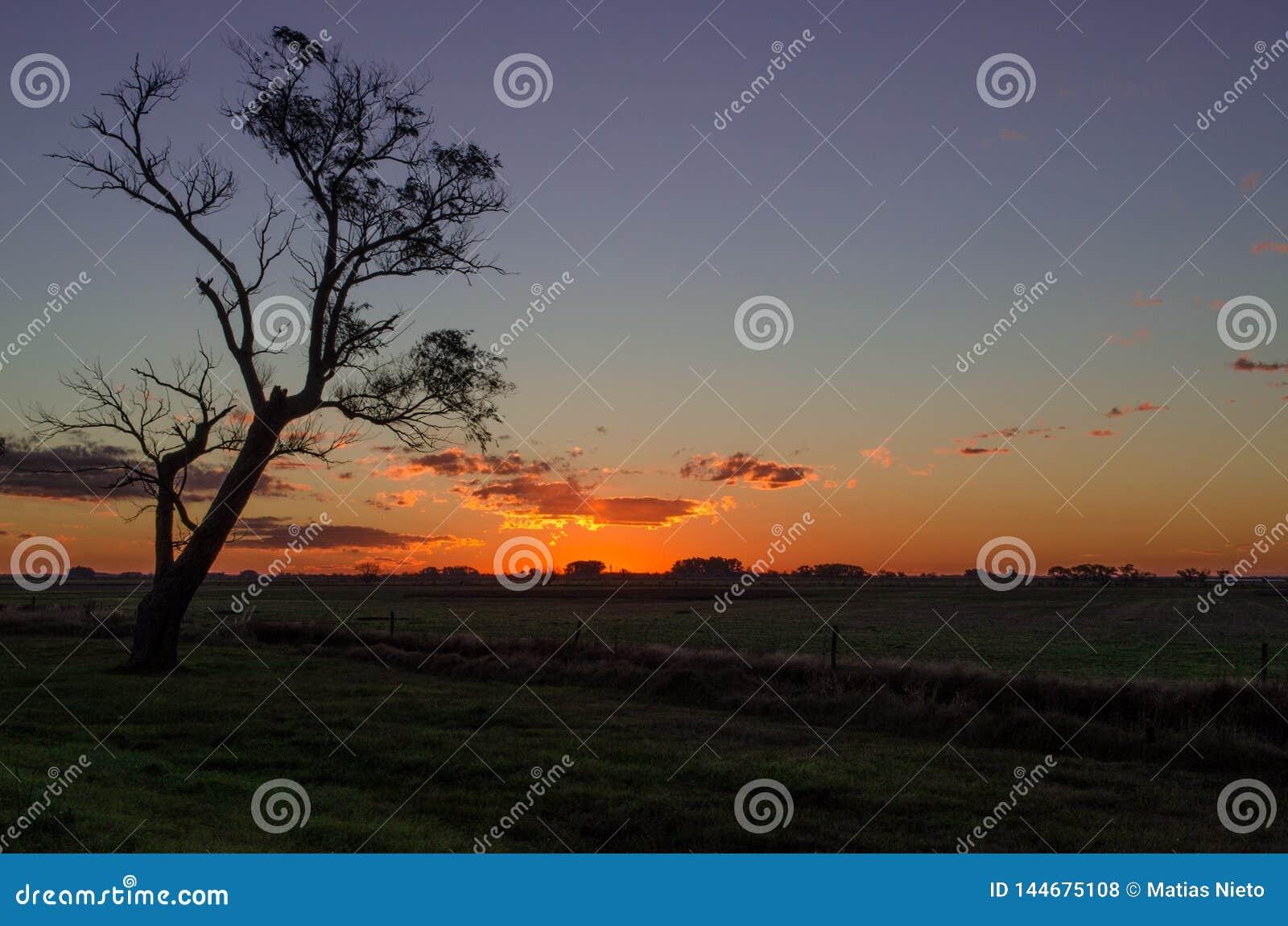 Puesta del sol y un árbol lejos profundamente en la Argentina