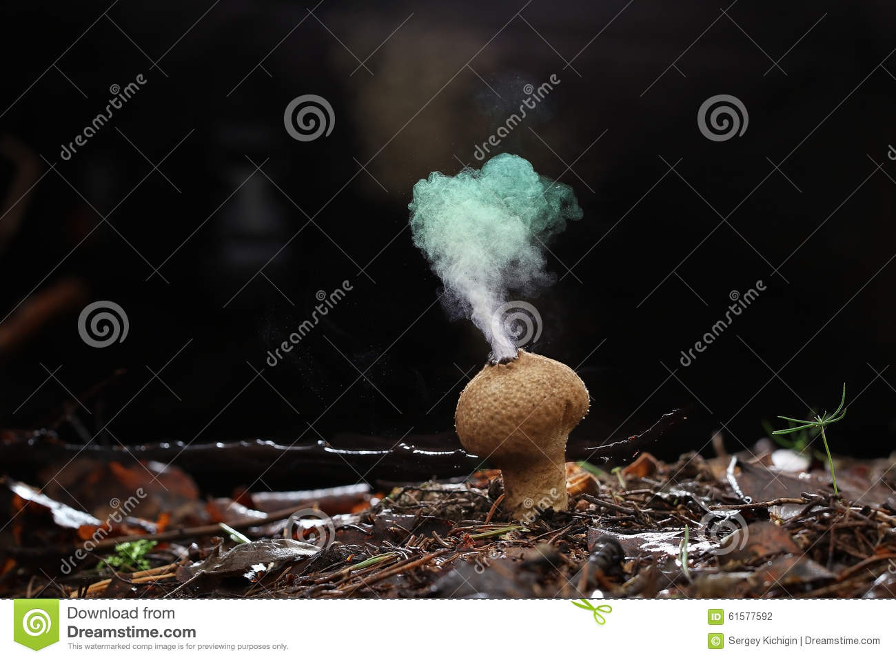 Puffball fungus spores like smoke